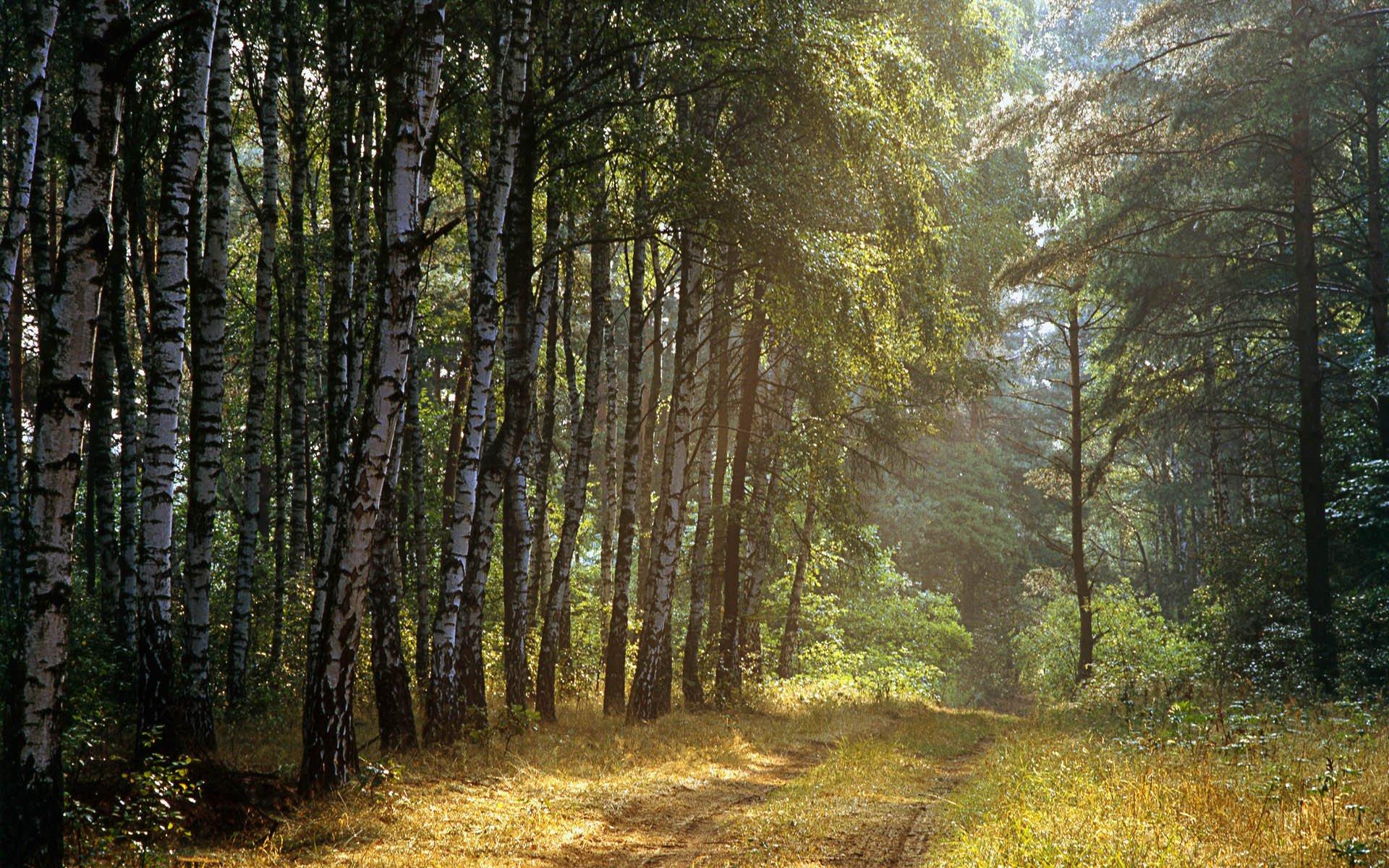 лесные пейзажи фото высокого разрешения коррекции недостатка необходимо