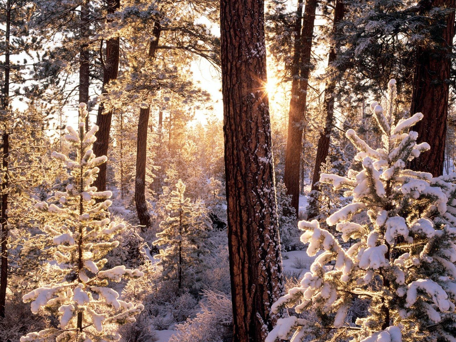 фото картинки на телефон зима каждого человека, знающего