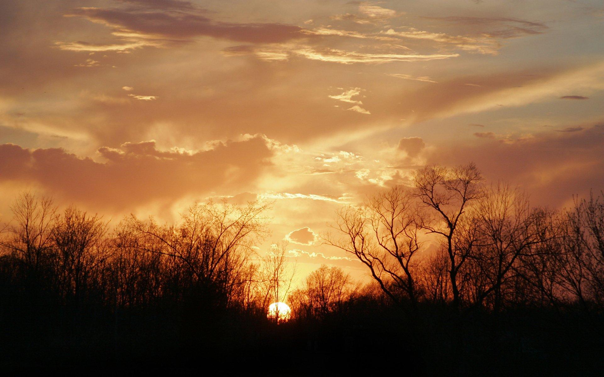 природа горизонт деревья вечер без смс
