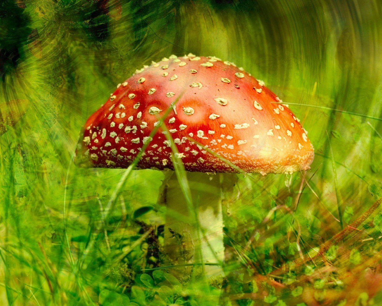Разные грибы картинка