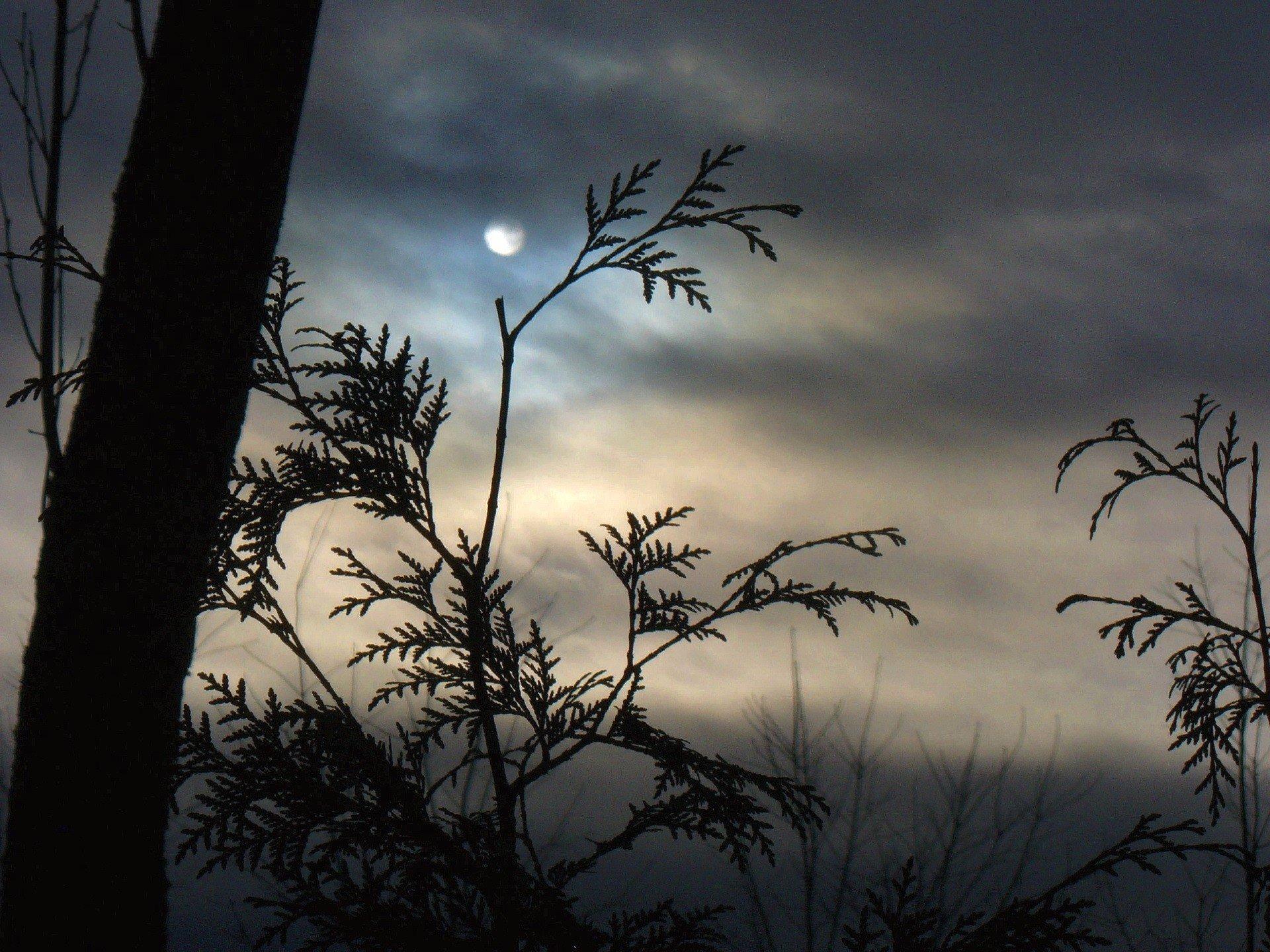 Ветки деревьев над безоблачным небом загрузить
