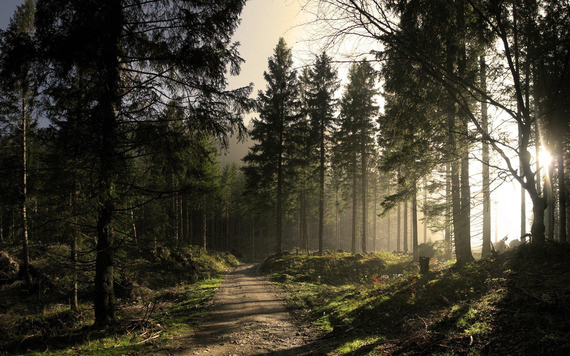 картинки леса на ноутбук установки съемных
