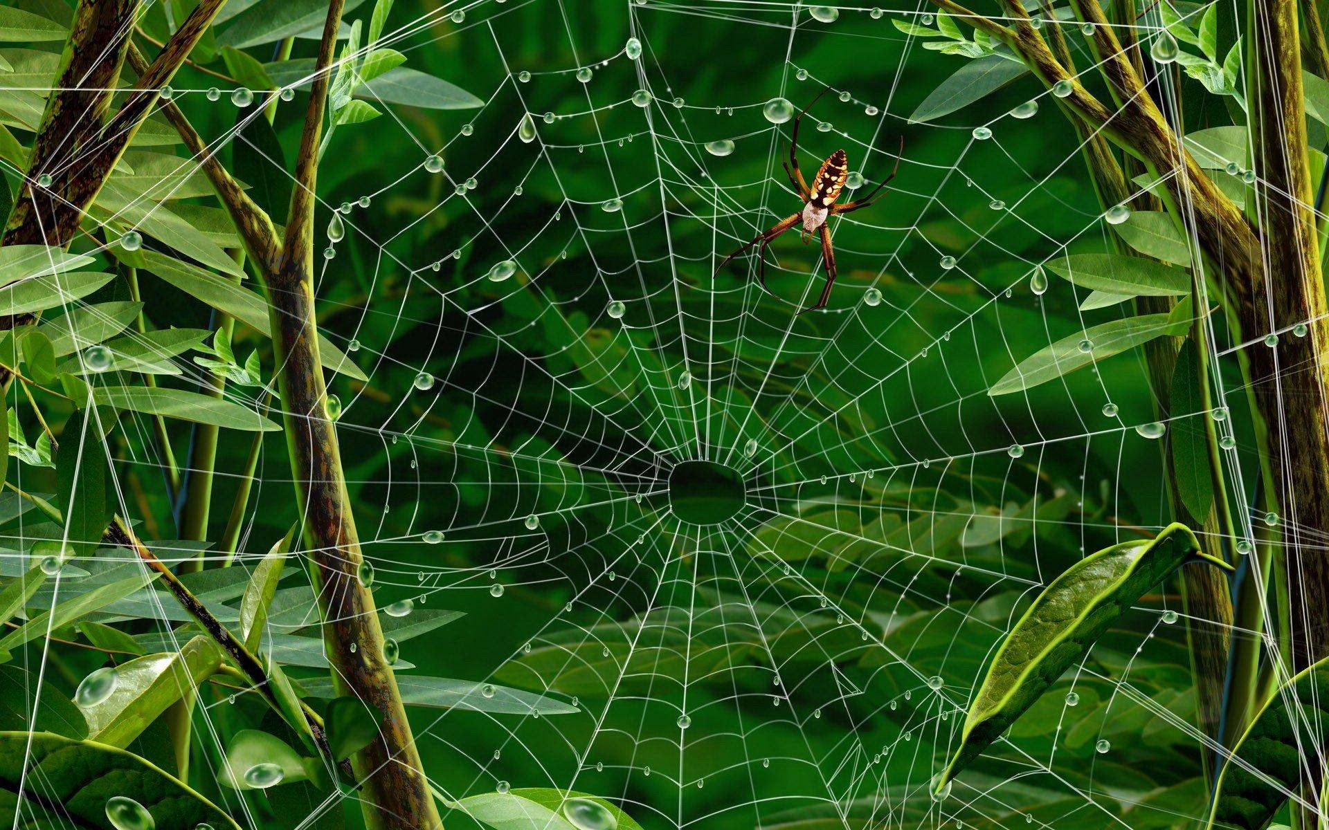 паук паутина без смс