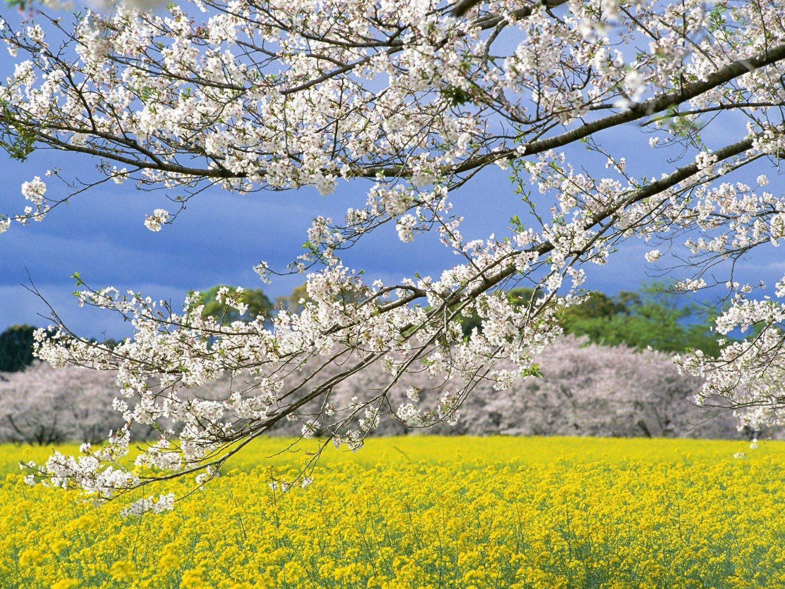 Надписями, картинки о природе весной