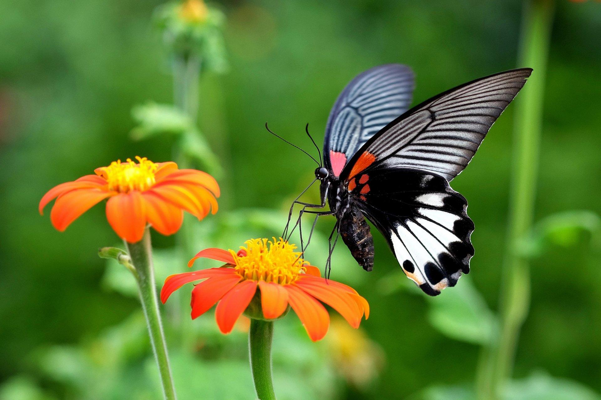 Обои насекомое, цветы. Природа foto 14