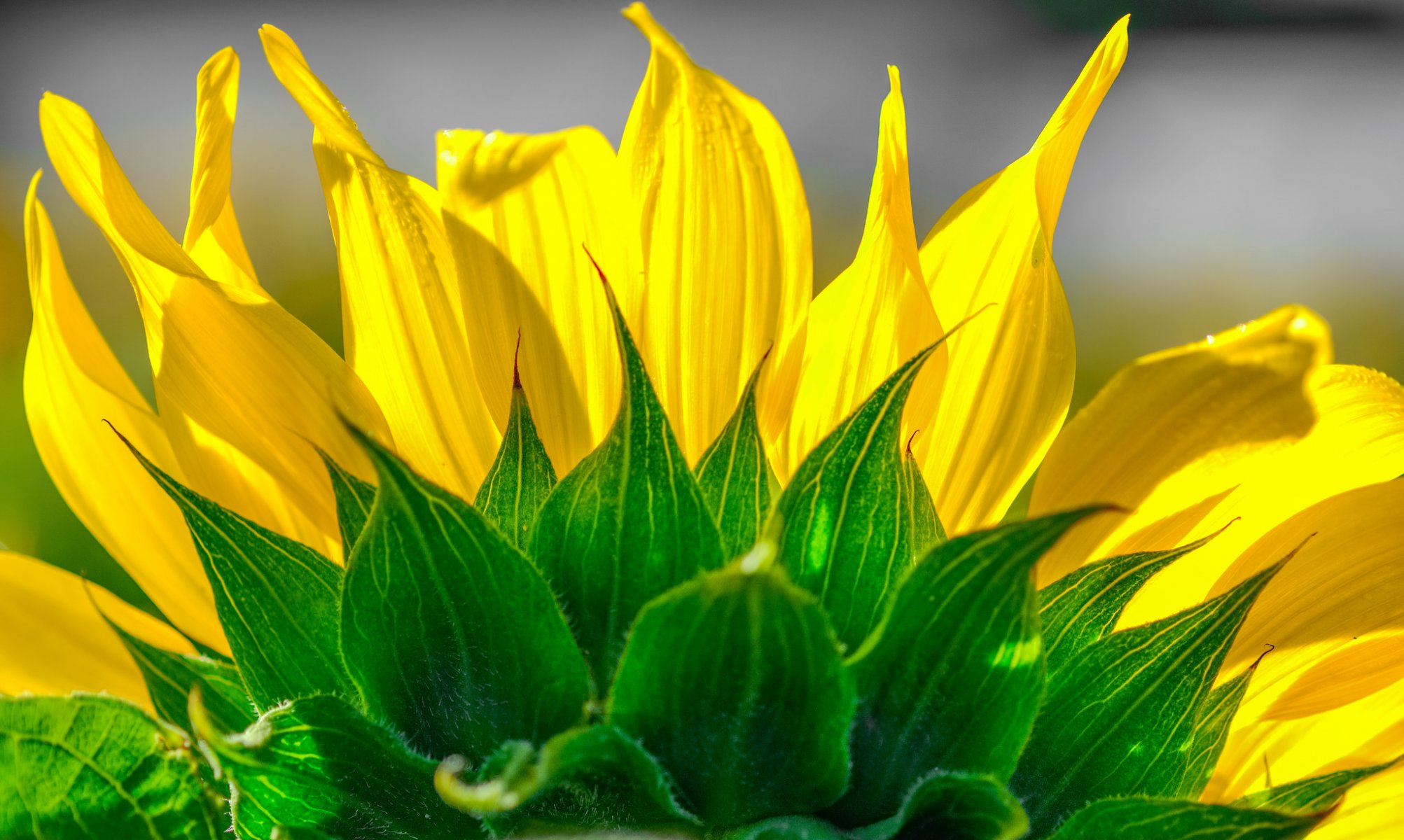желто зеленые картинки на природе речь
