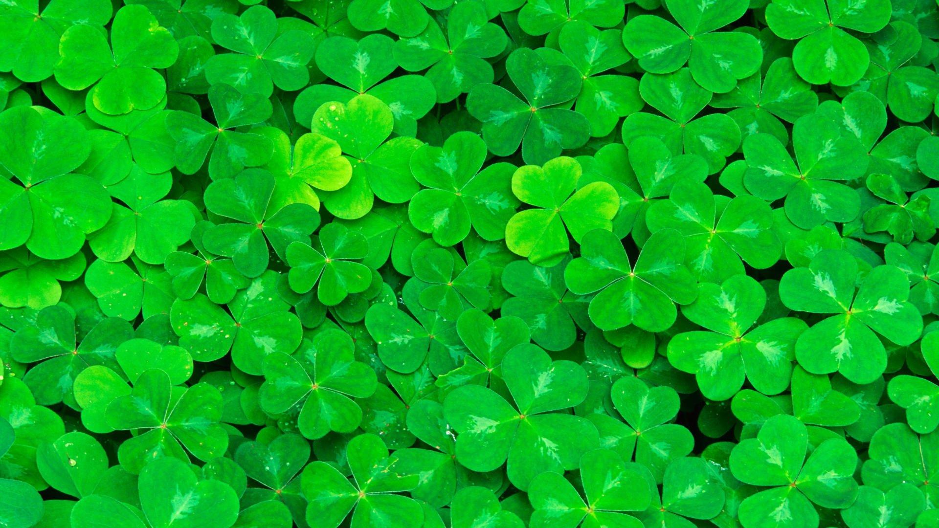 Зеленые обои на планшет