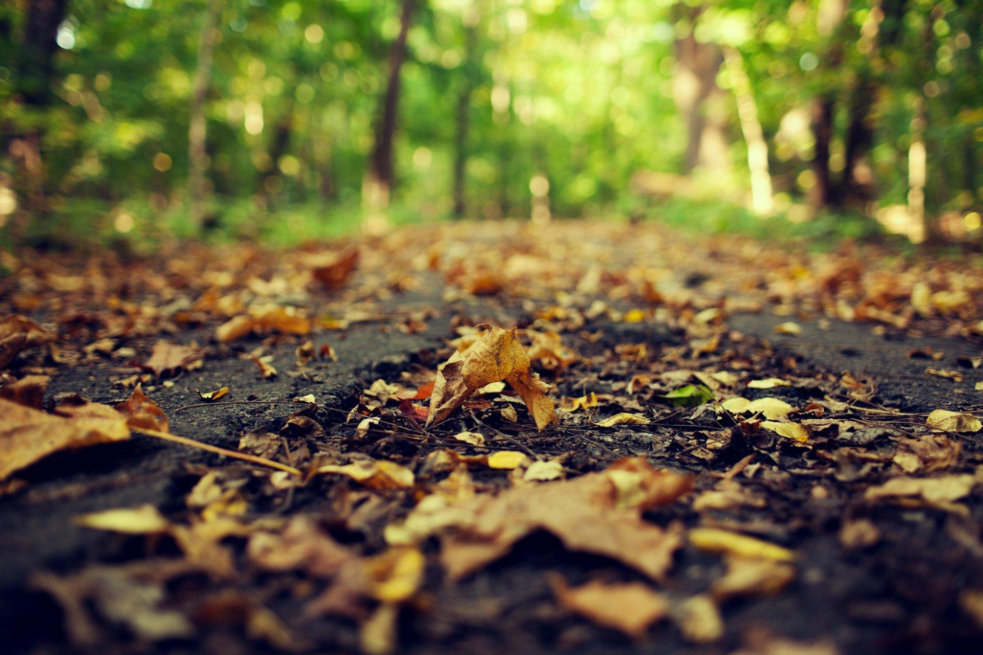 Обои желтые, асфальт, осень. Природа foto 10