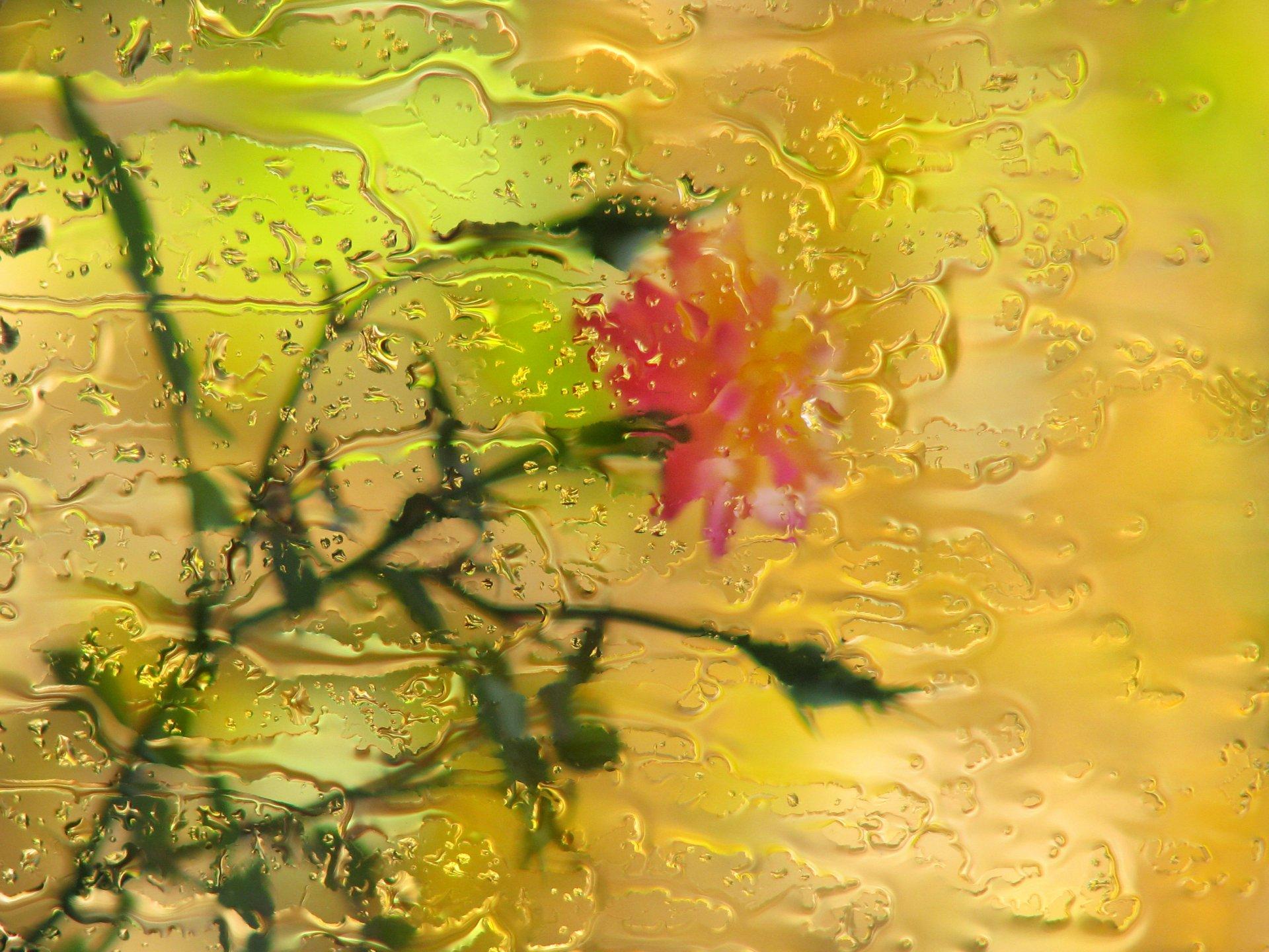 Открытки дождь и цветы, улыбка счастье открытки