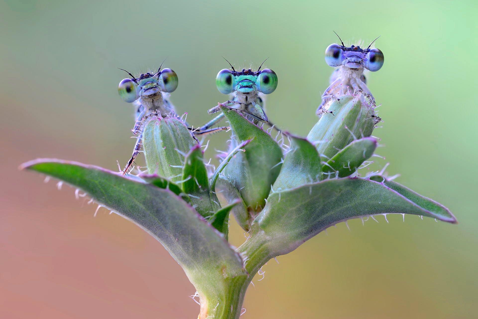 природа макро насекомое глаза без смс