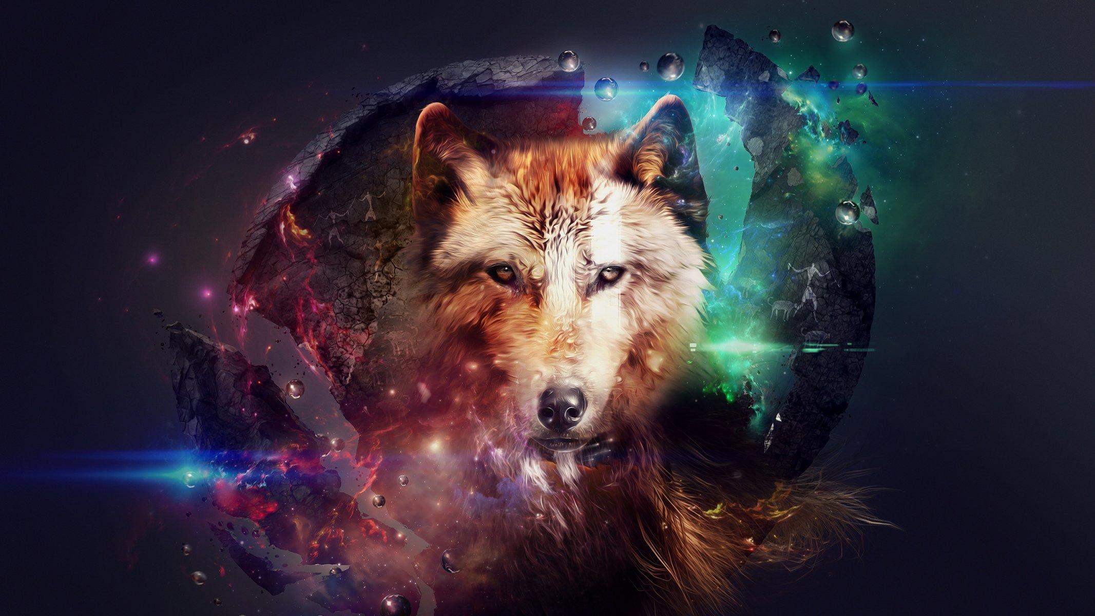 Обои волки. Животные foto 15