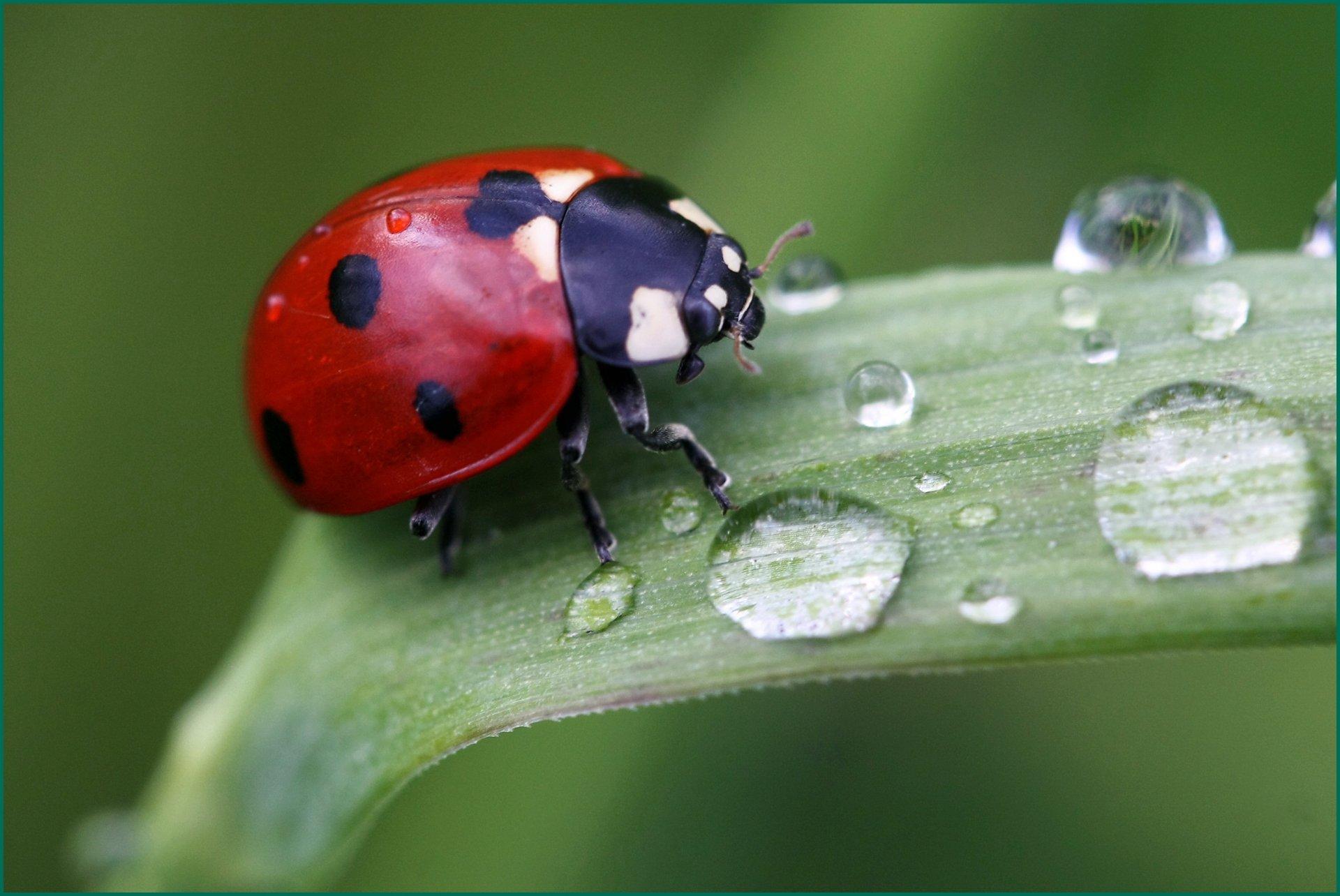 Картинки природа и насекомые