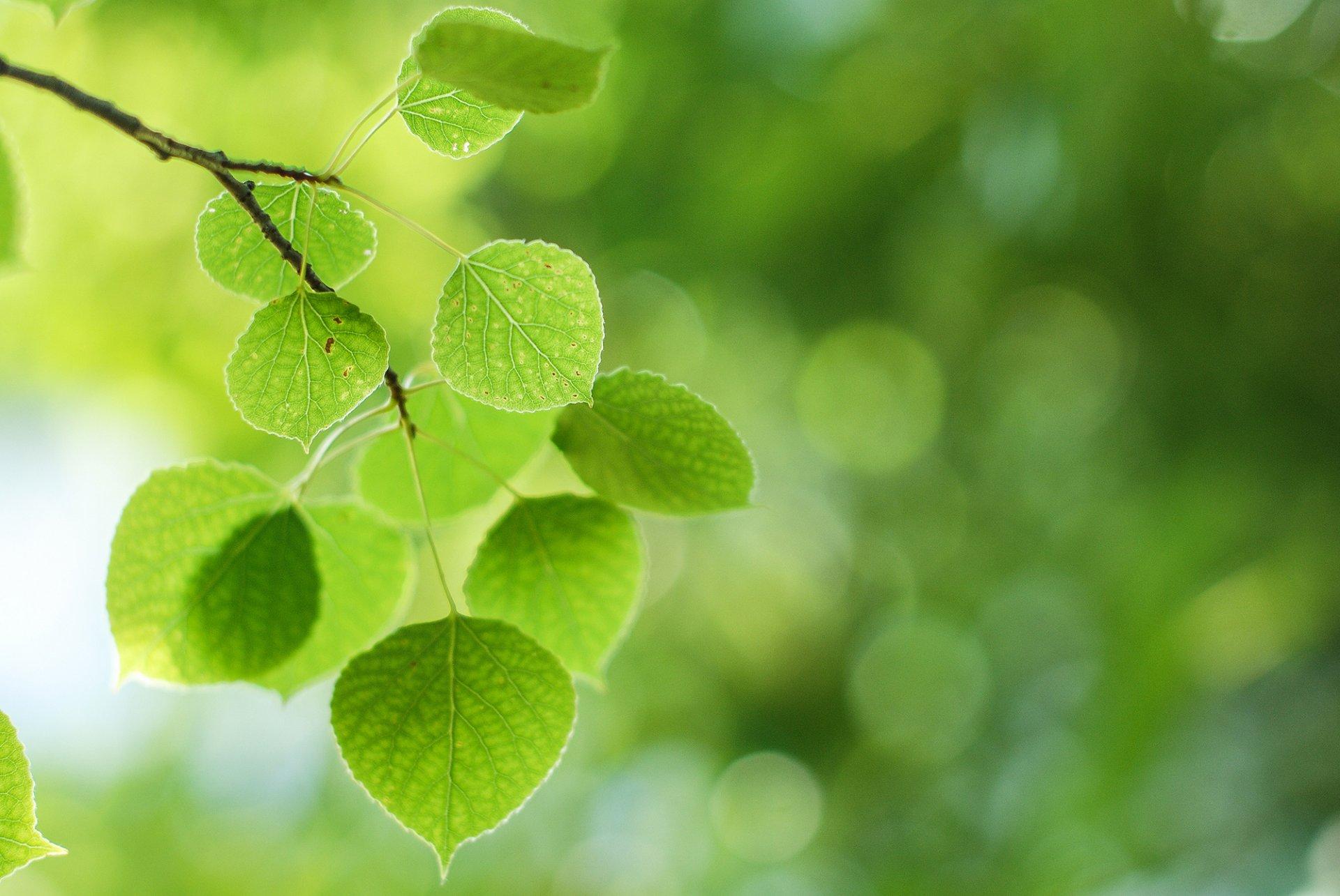 китайскому картинки природа листочки наклеивания