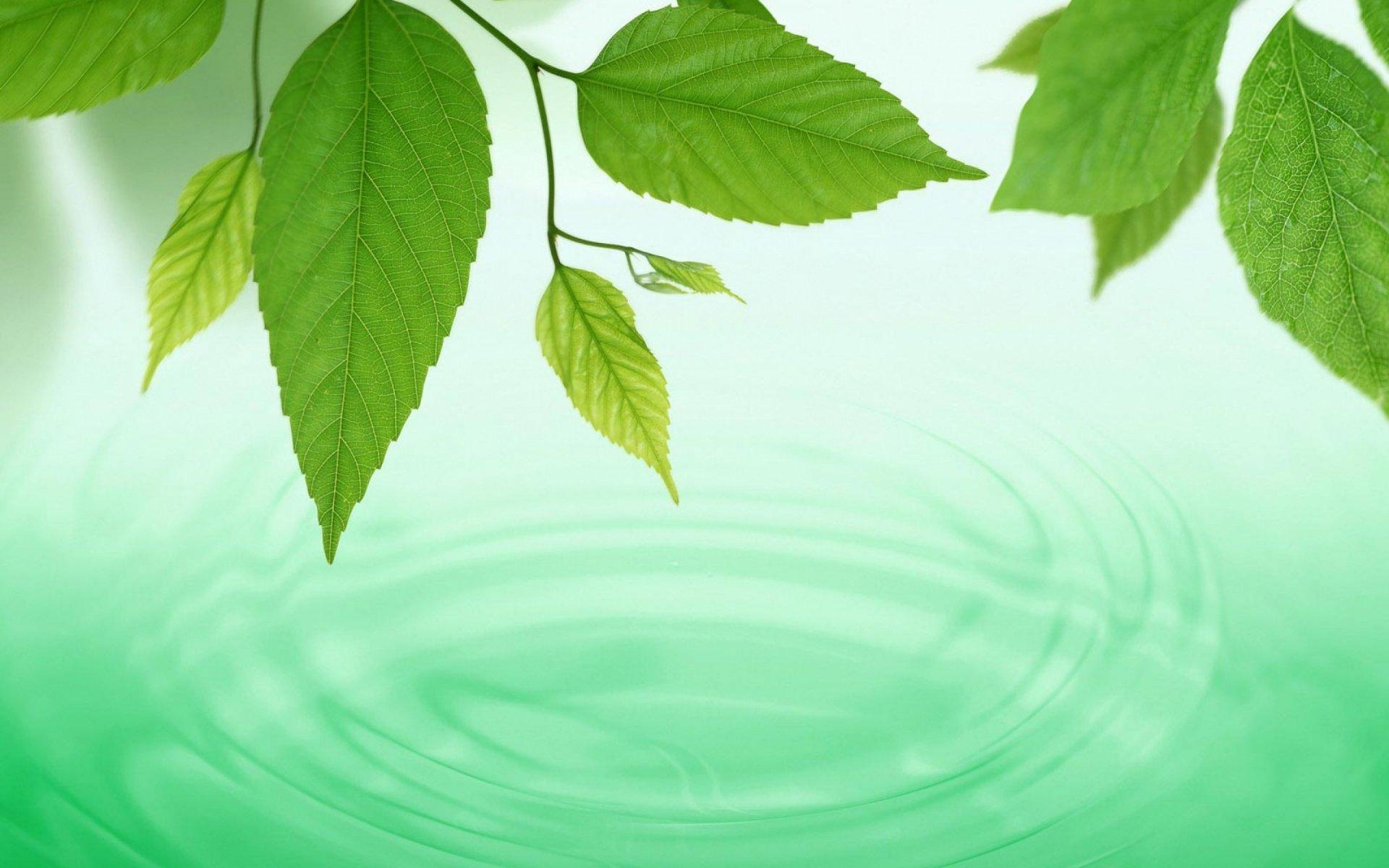 лист вода  № 1505924 загрузить