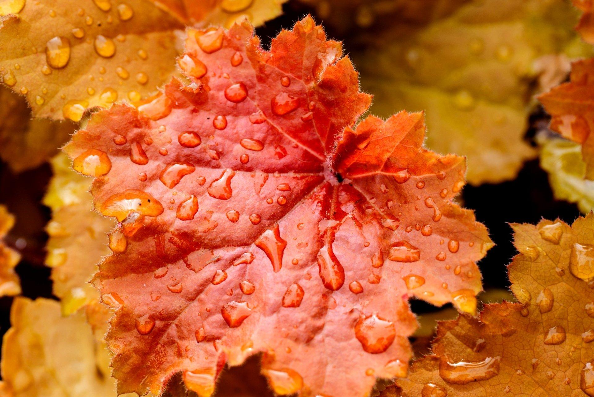 Formal Elements Colour : лист листья оранжевые желтые вода капли капельки осень