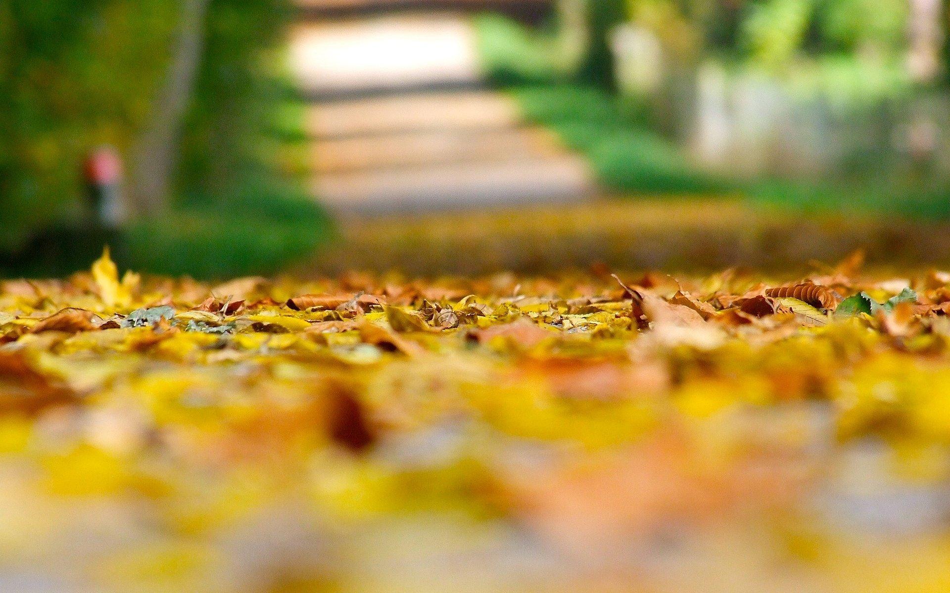 листья осенние размытый фон загрузить