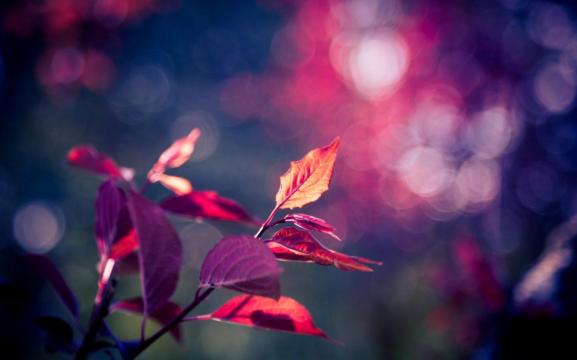 листья осенние размытый фон скачать