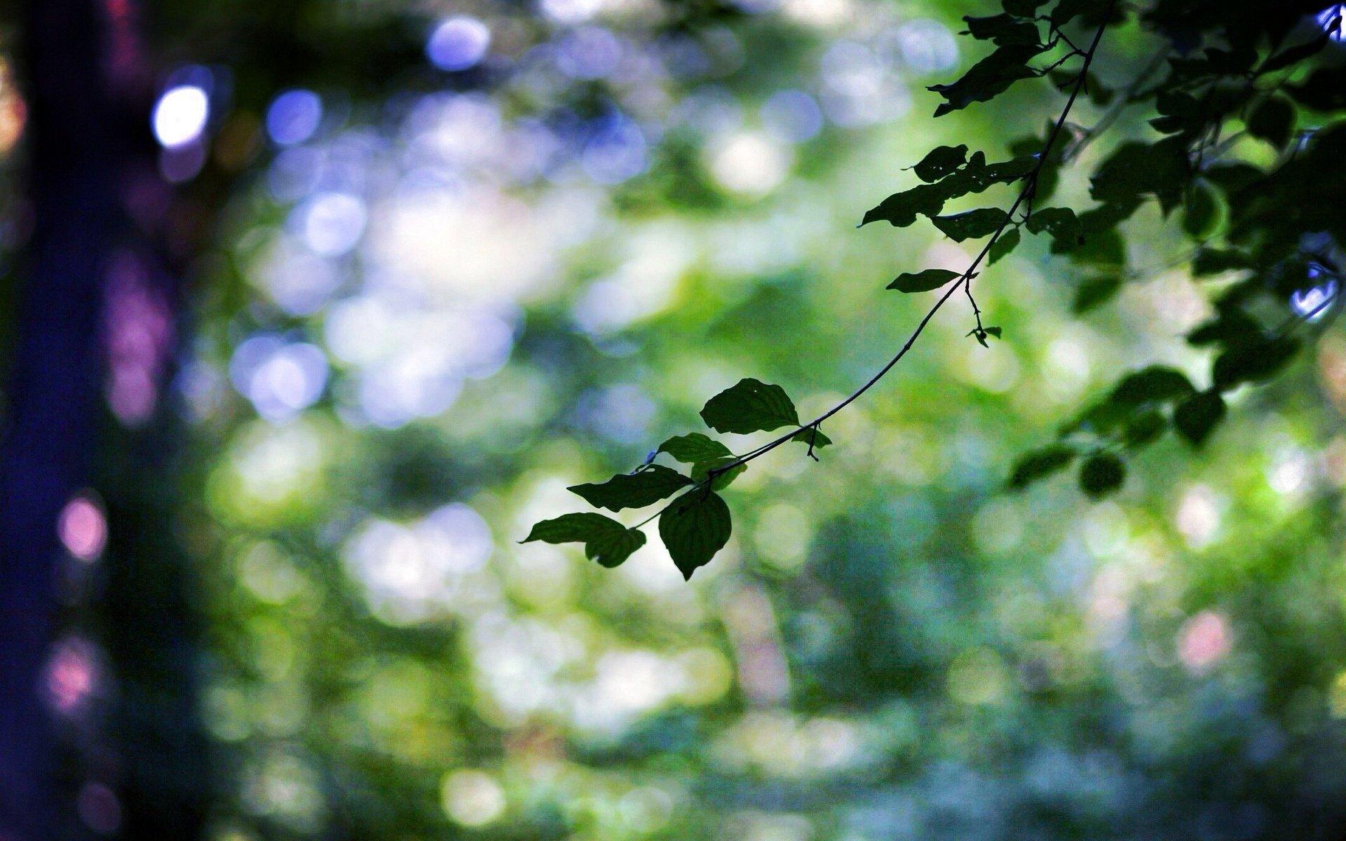 природа размытие ветка без смс