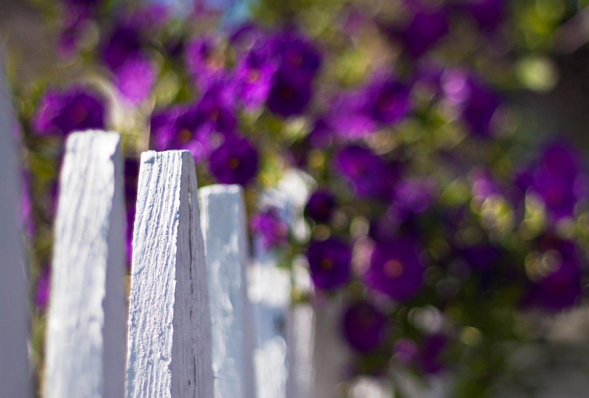 картинки на рабочий стол забор в цветах всех