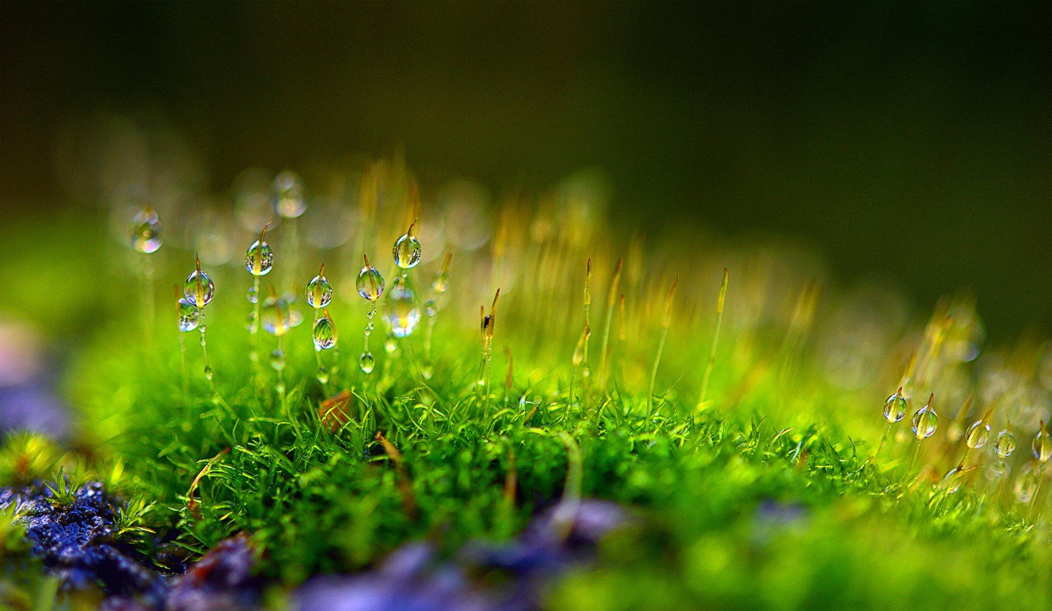 Шарик растительности без смс