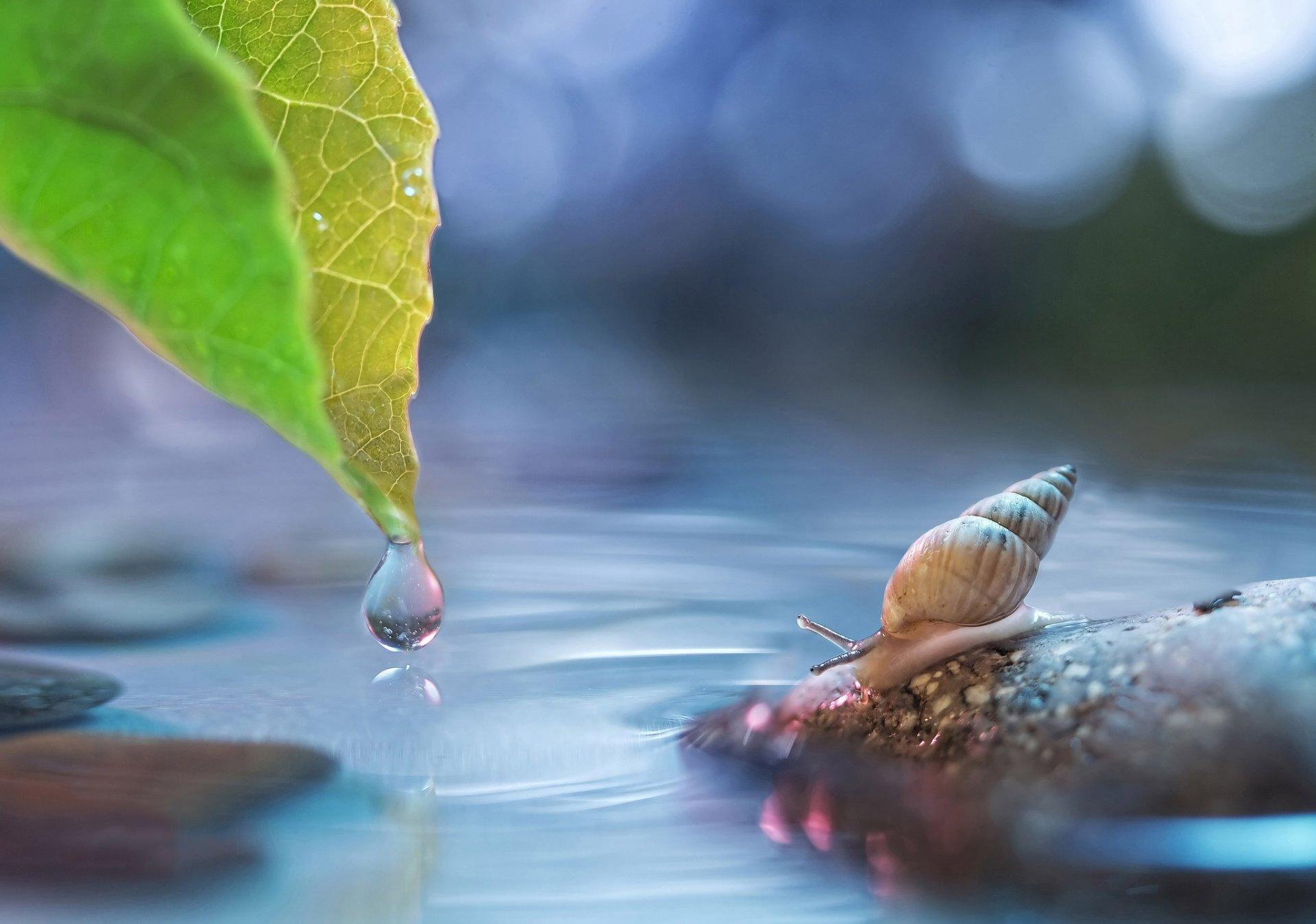 Красивые фото макросъемки воды уменьшить вес