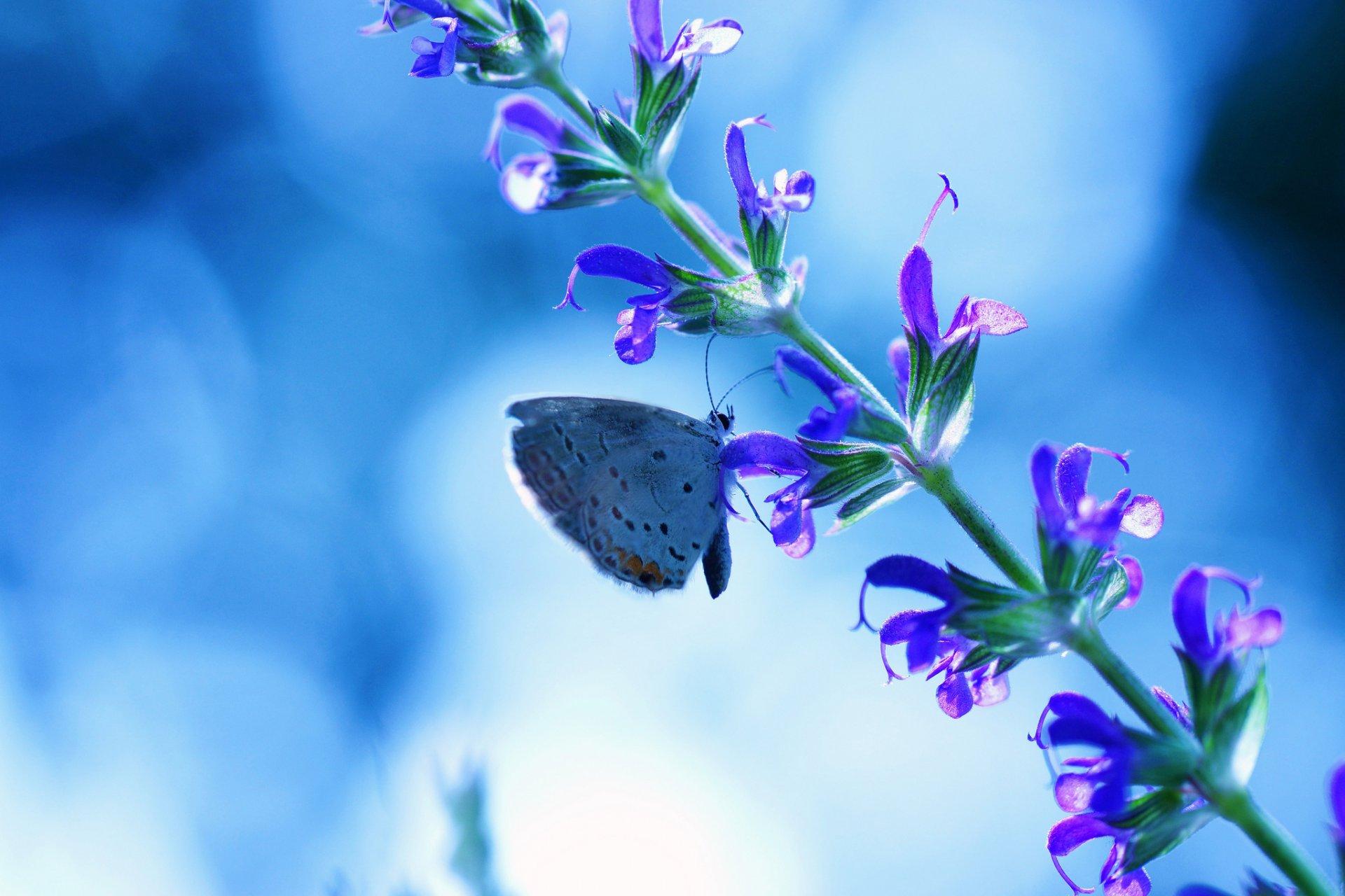 Картинки с синими цветами и бабочками, выздоровлением открытках