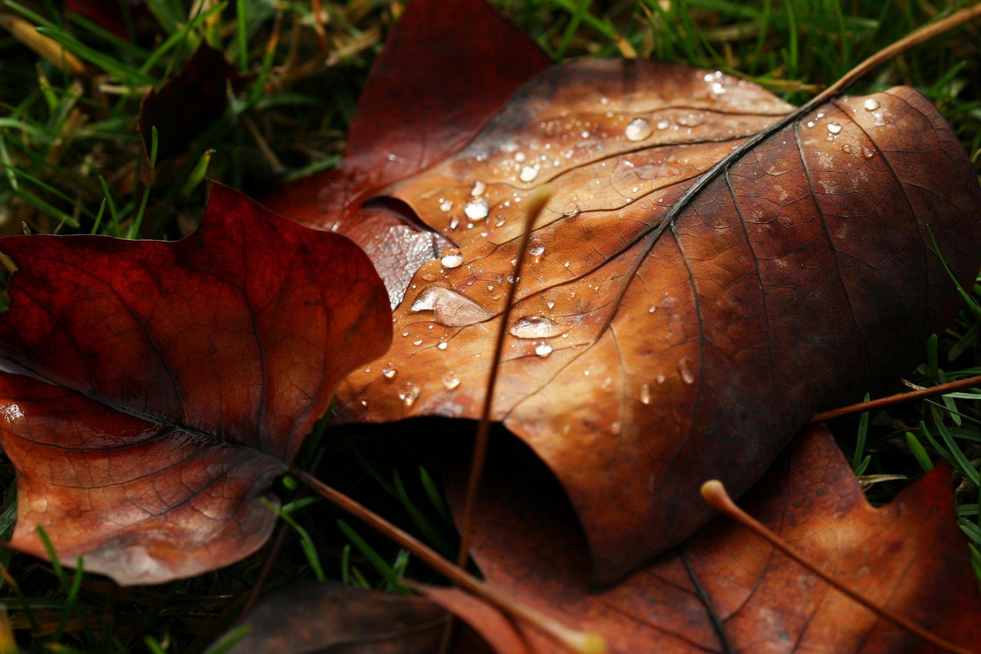 Кленовый лист лист вода на воде бесплатно