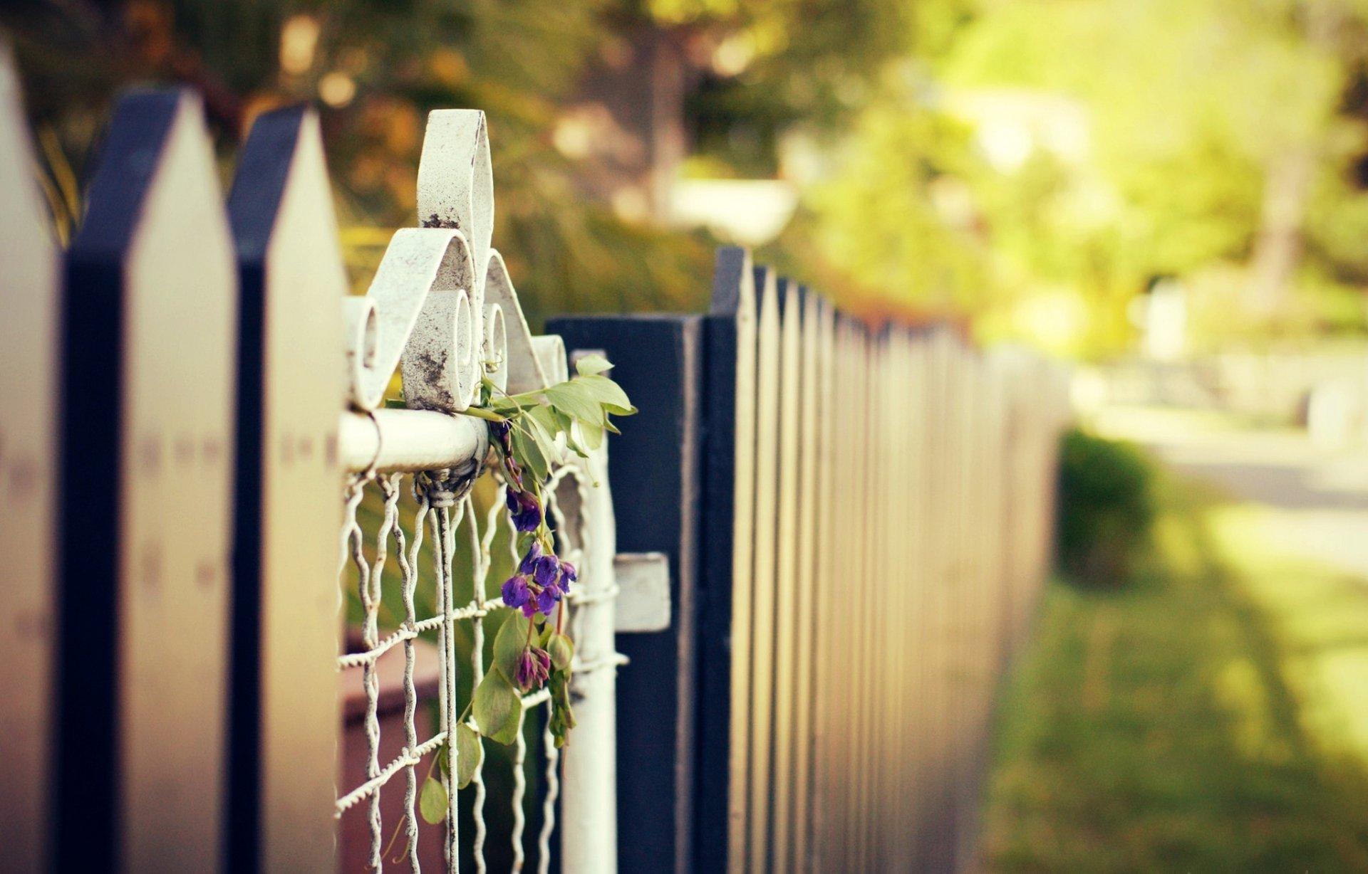 Забор цветы  № 2488853  скачать