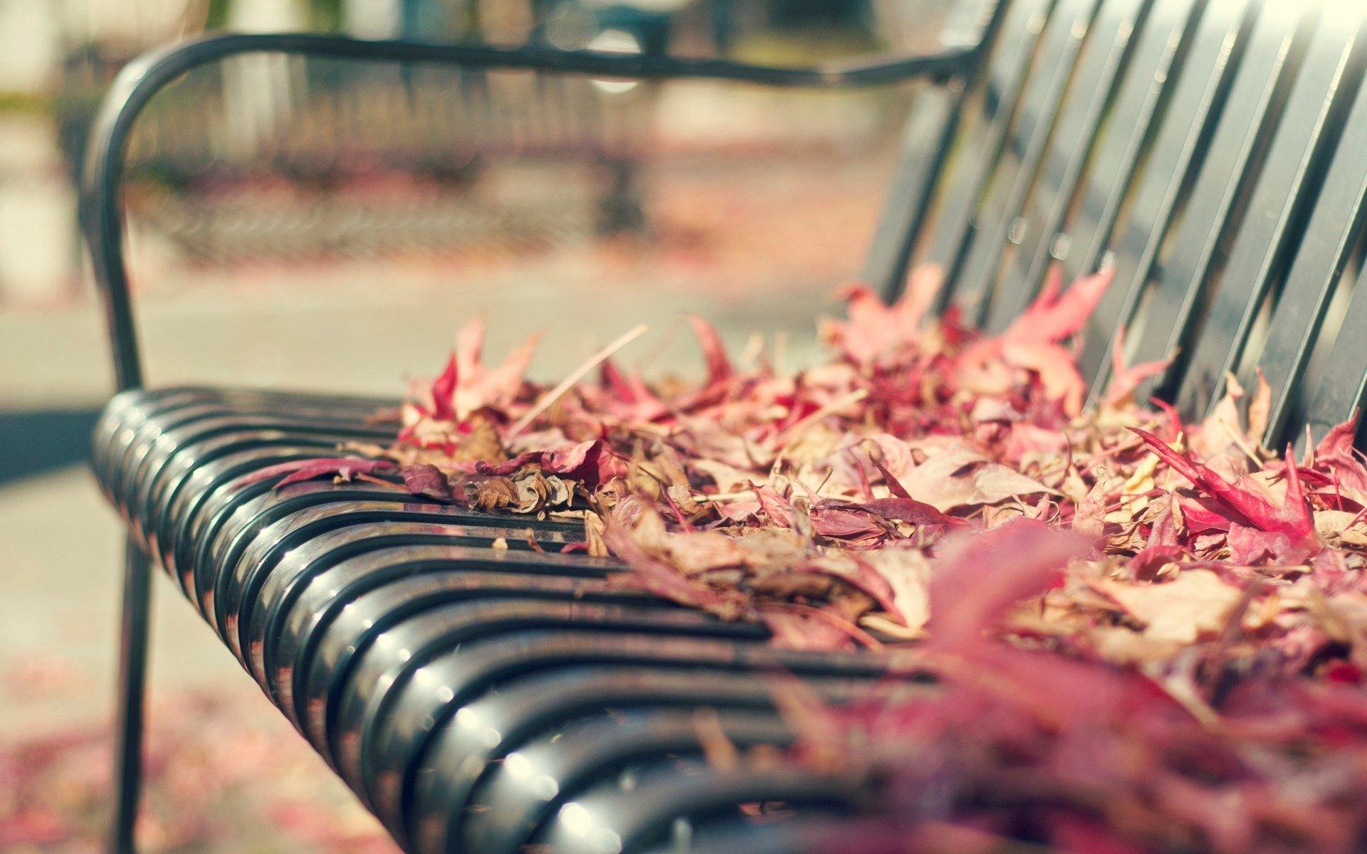 Осень листья лавка стол  № 3187420  скачать