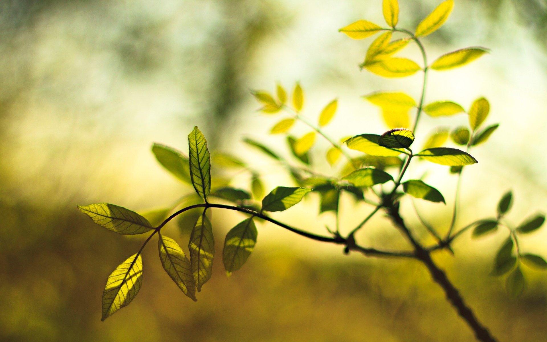 листья зелень фокус  № 1341639 загрузить