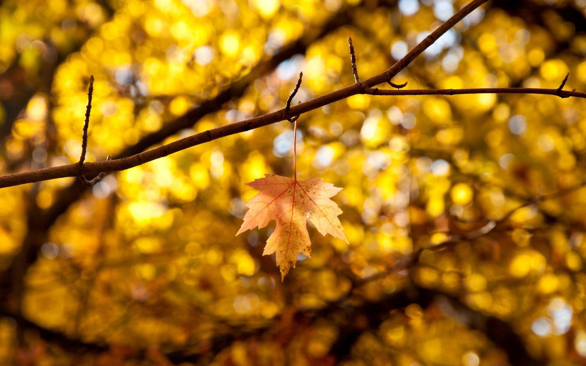 Картинки осень на широкоформатный экран