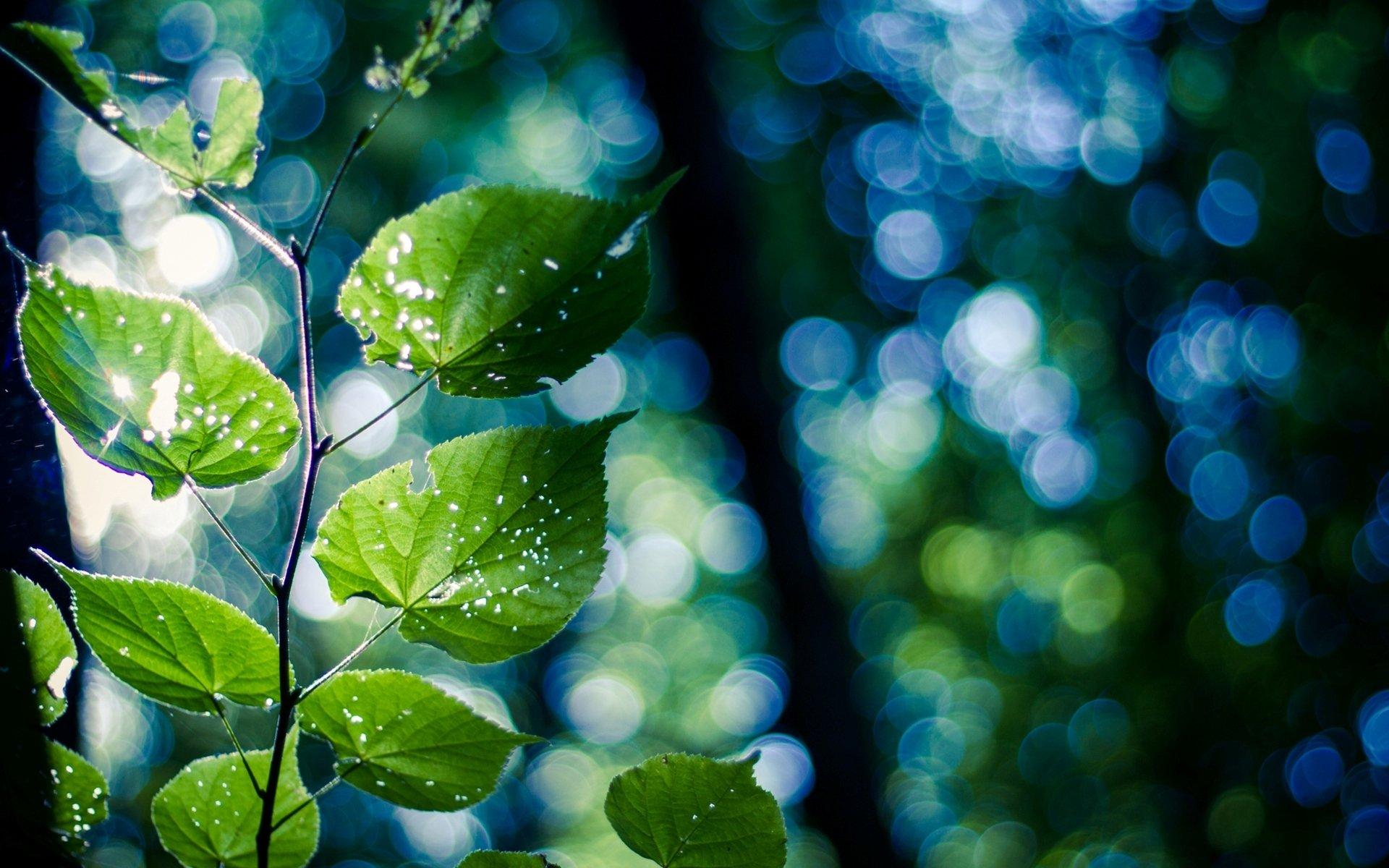 Картинки в сине зеленом цвете