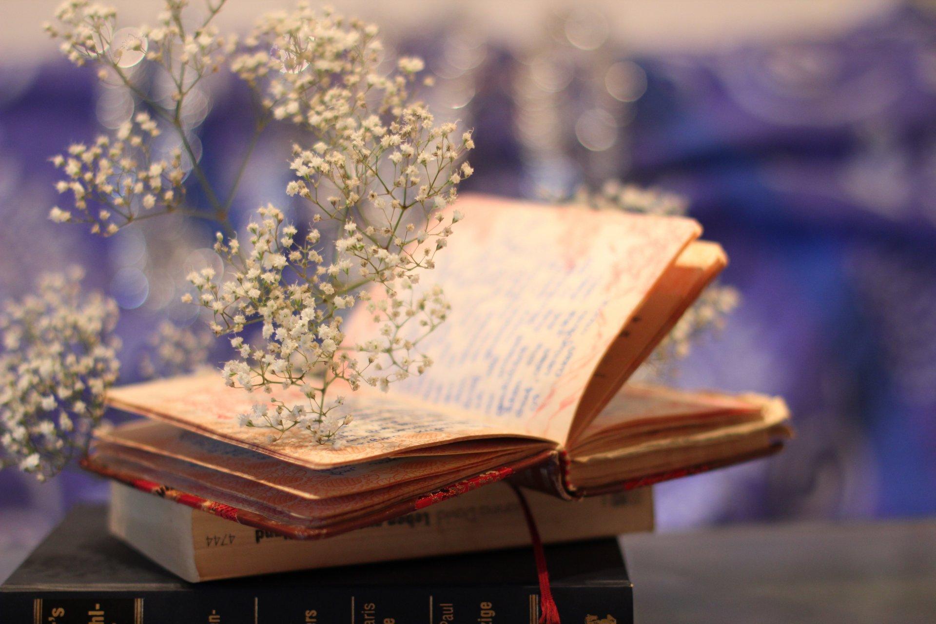 Цветок в книге  № 1489045 без смс