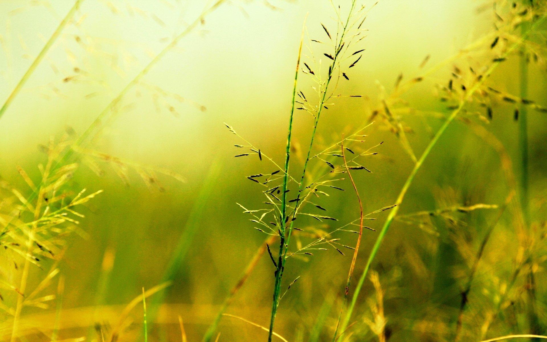желто зеленые картинки на природе каждый взлет