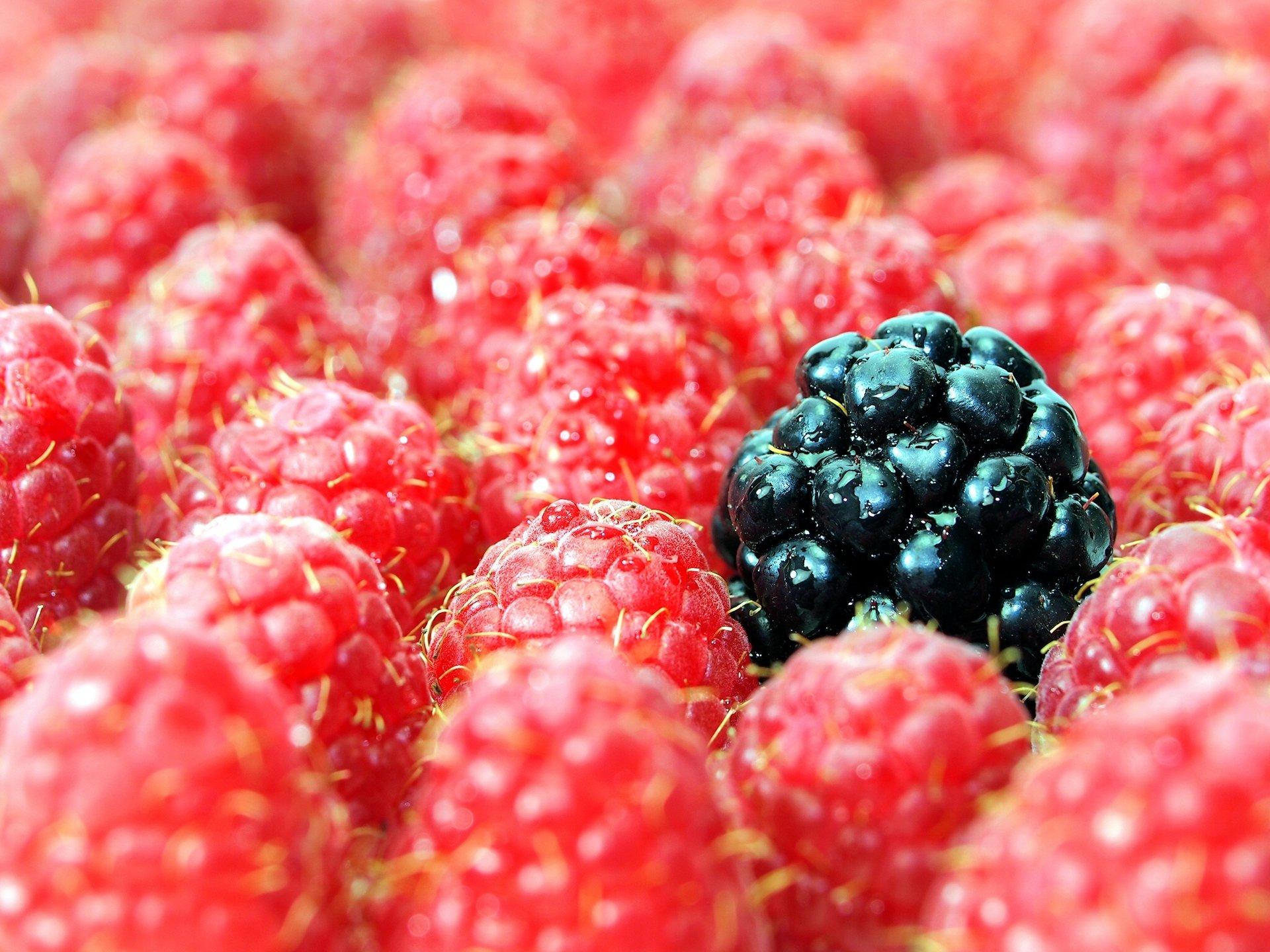 голых картинки на телефон красивые ягоды выступаете роли