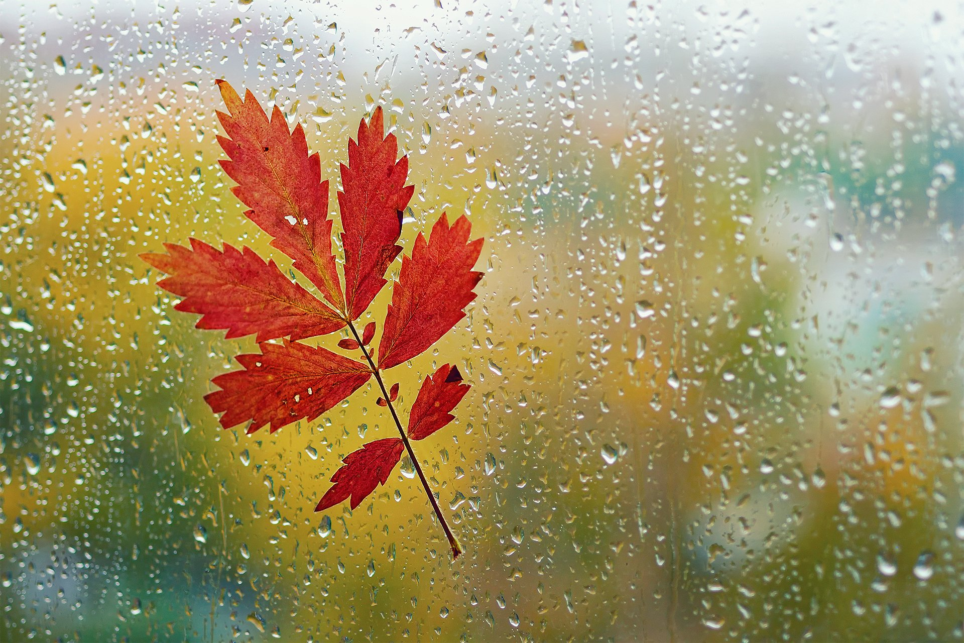 Картинки осень с дождем на рабочий