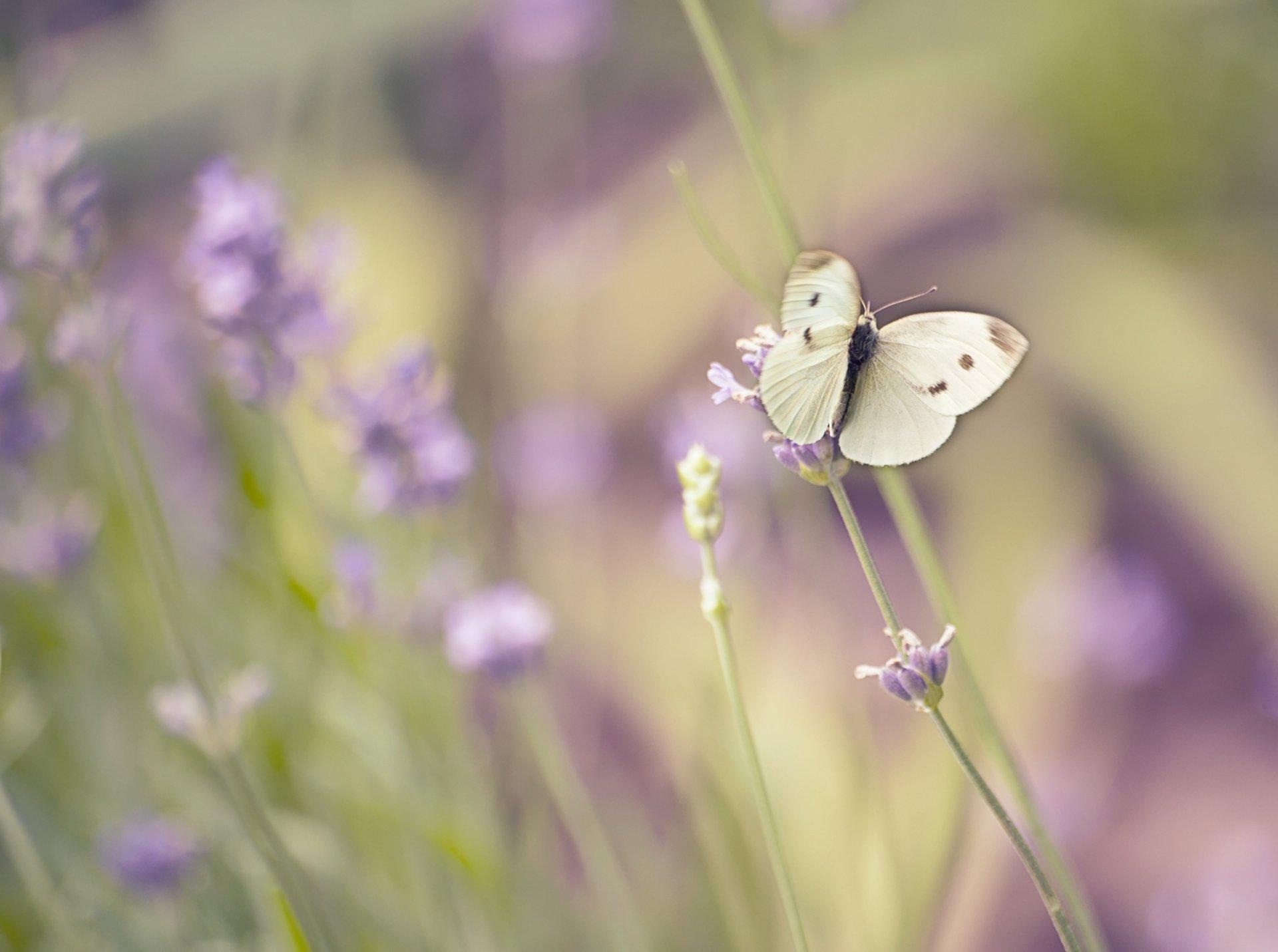 Макро фото полевых цветов
