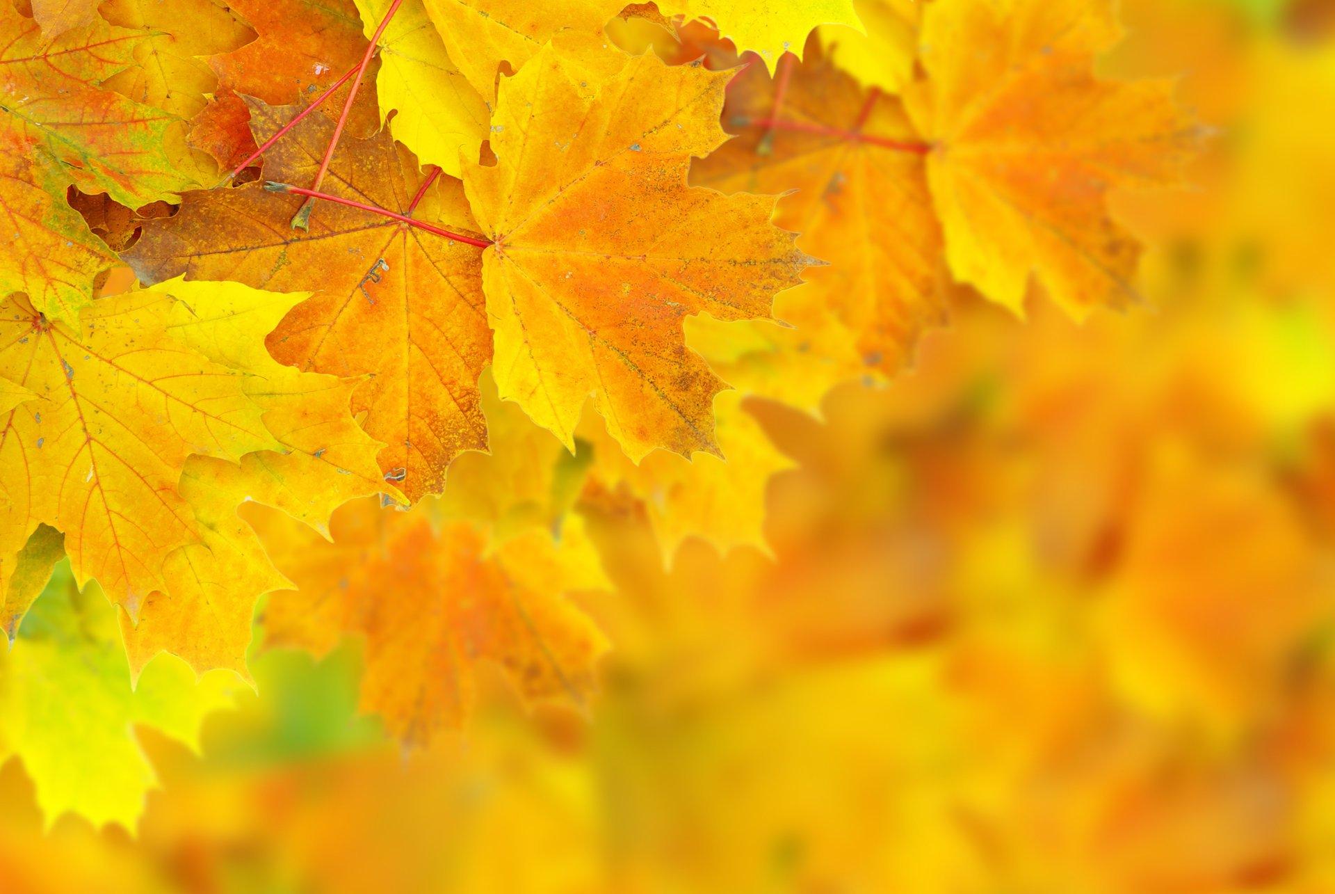 заготовок фон для фотографии осень как