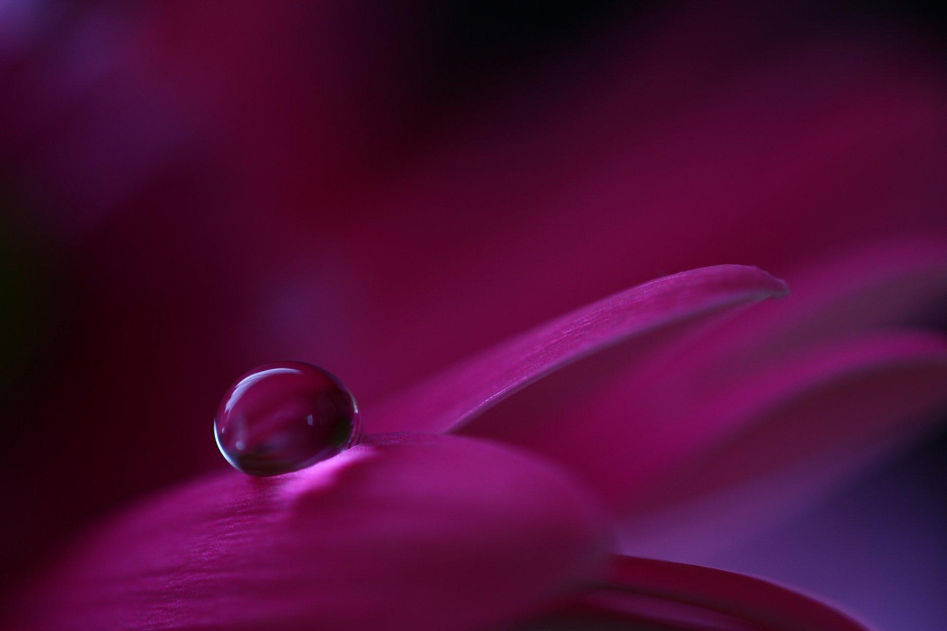 цветы макро капля загрузить
