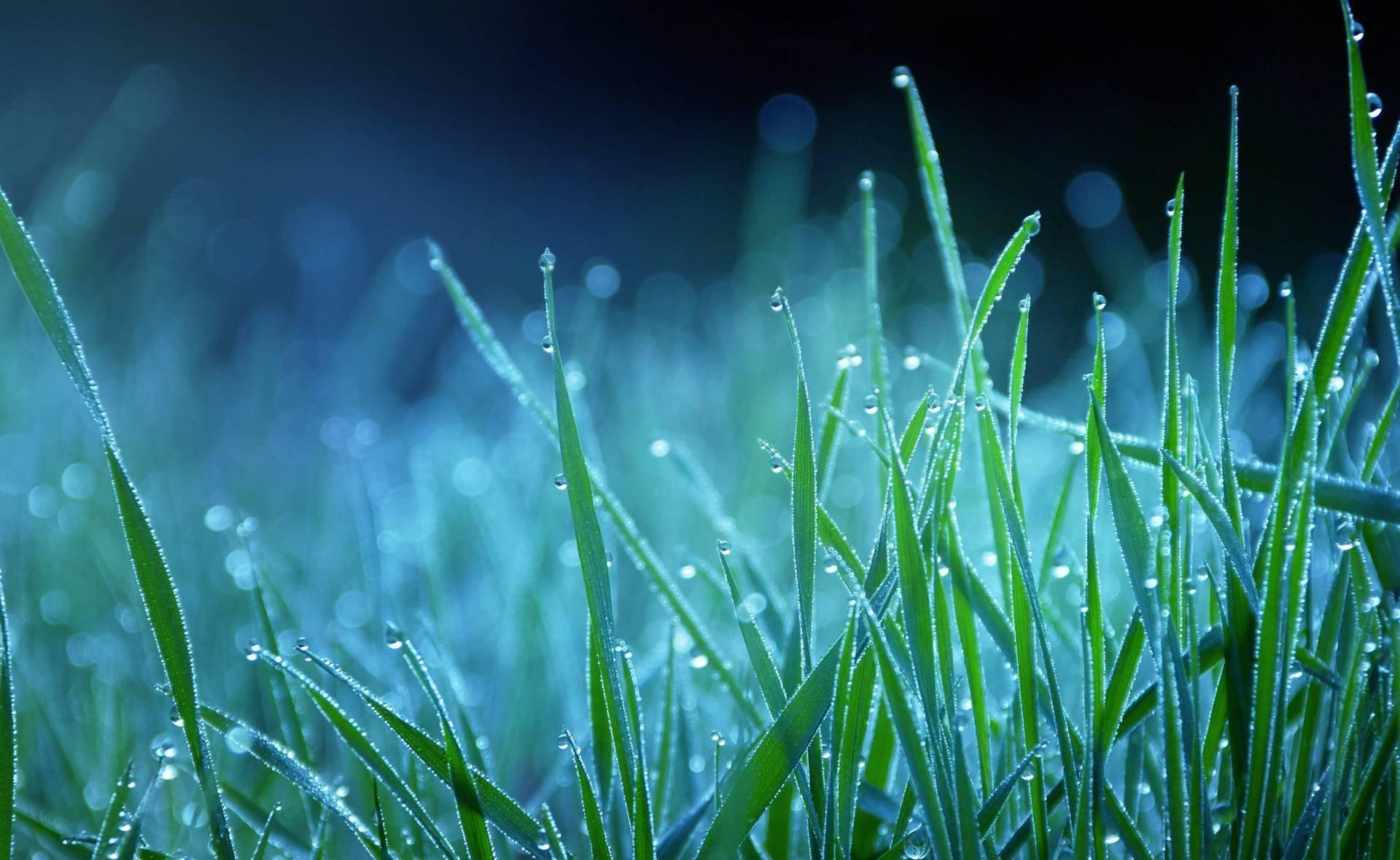 Трава в каплях загрузить