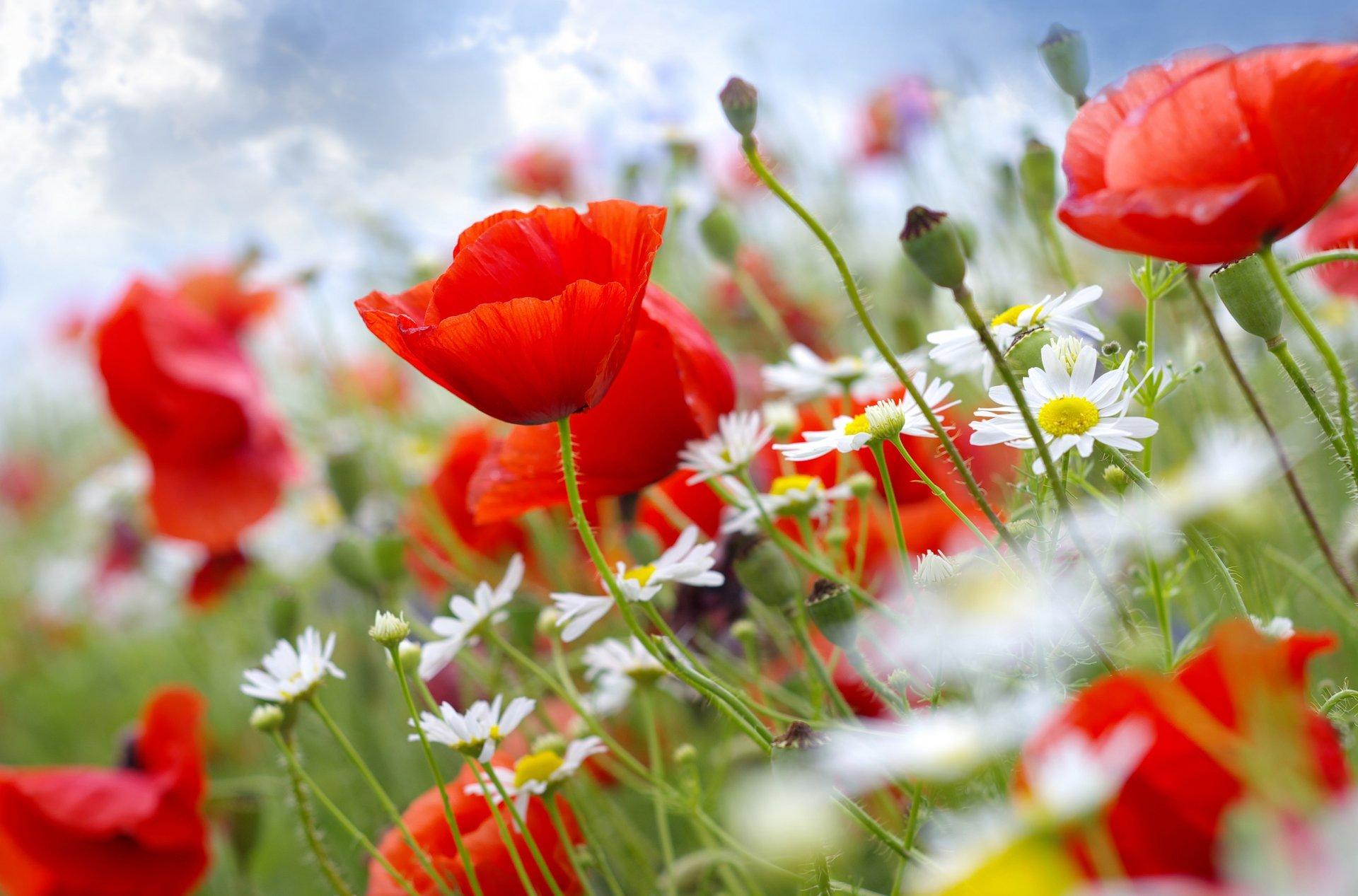 большом обои на телефон летние цветы располагается