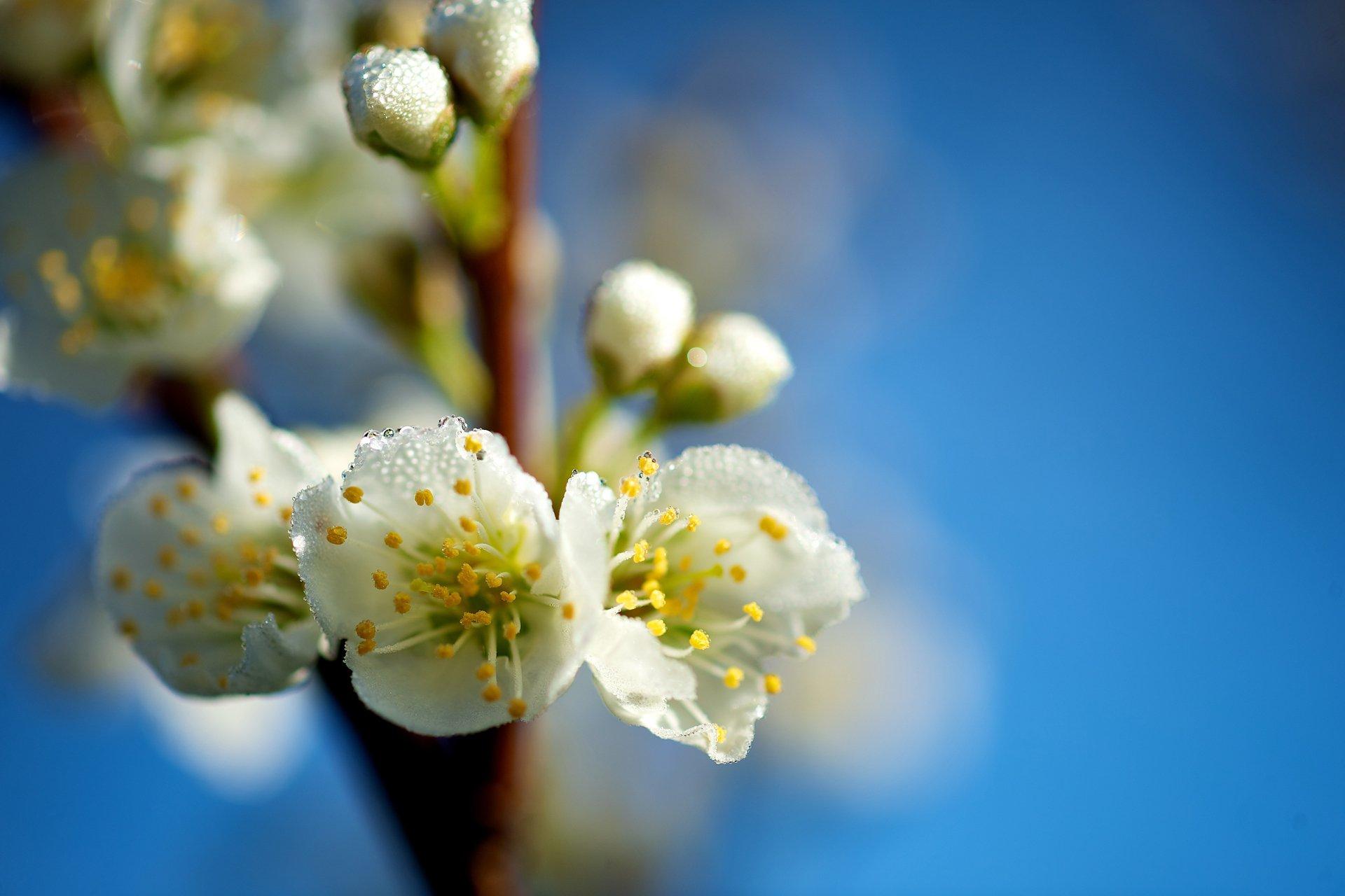 оценит красивые картинки весна на рабочий стол широкоформатные под крепления