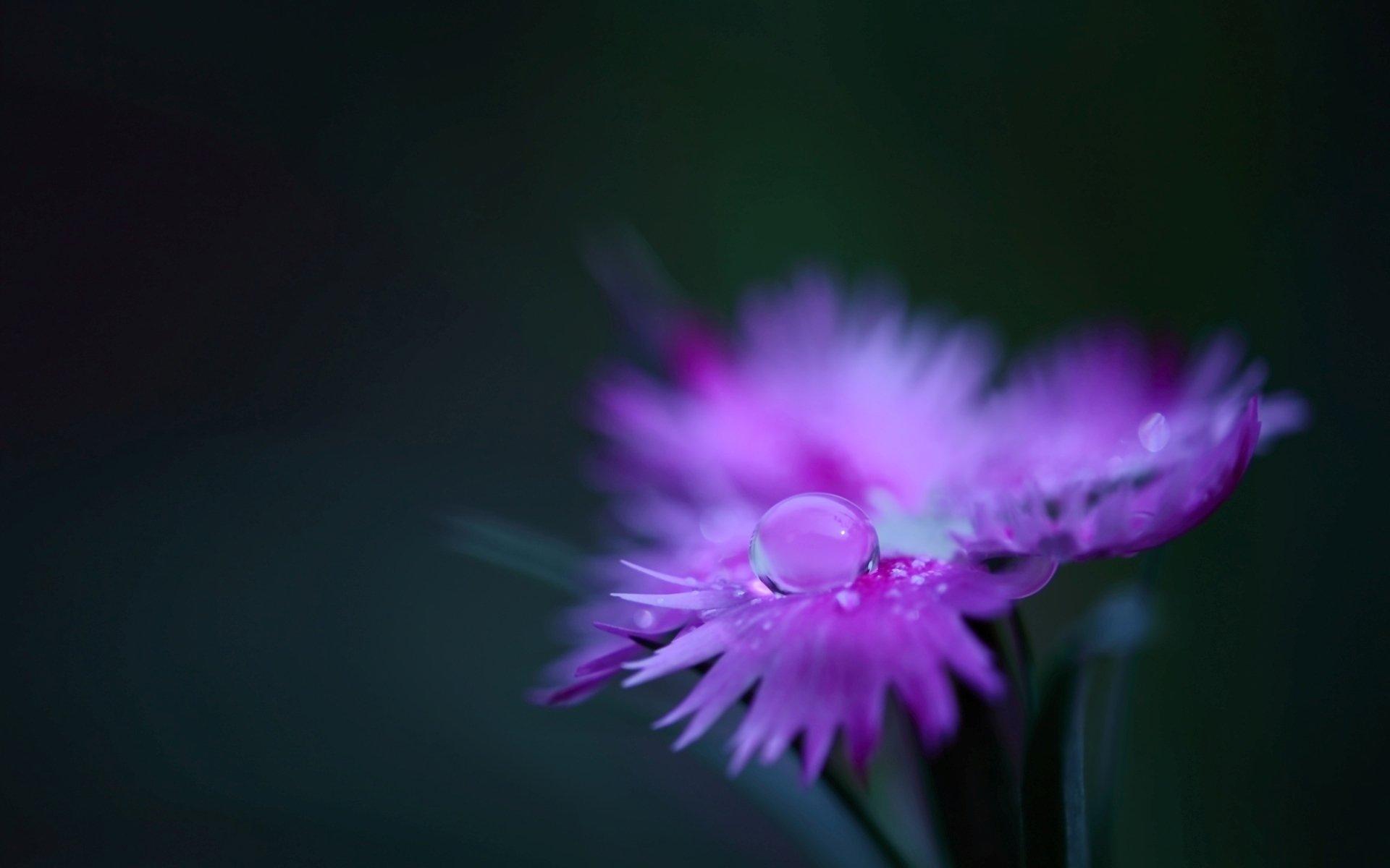 Цветок капли размытость скачать