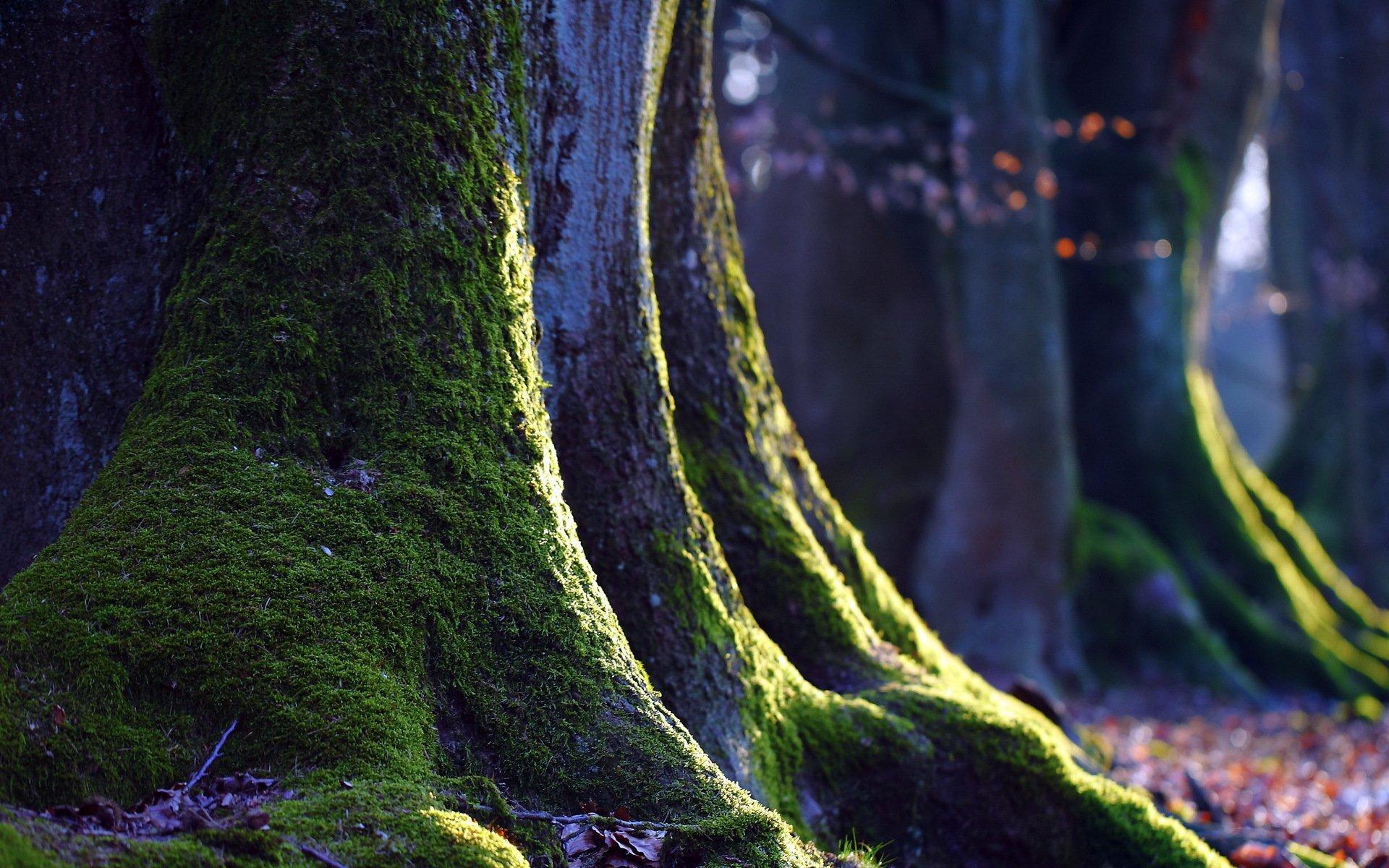 природа мох лестница трава деревья бесплатно