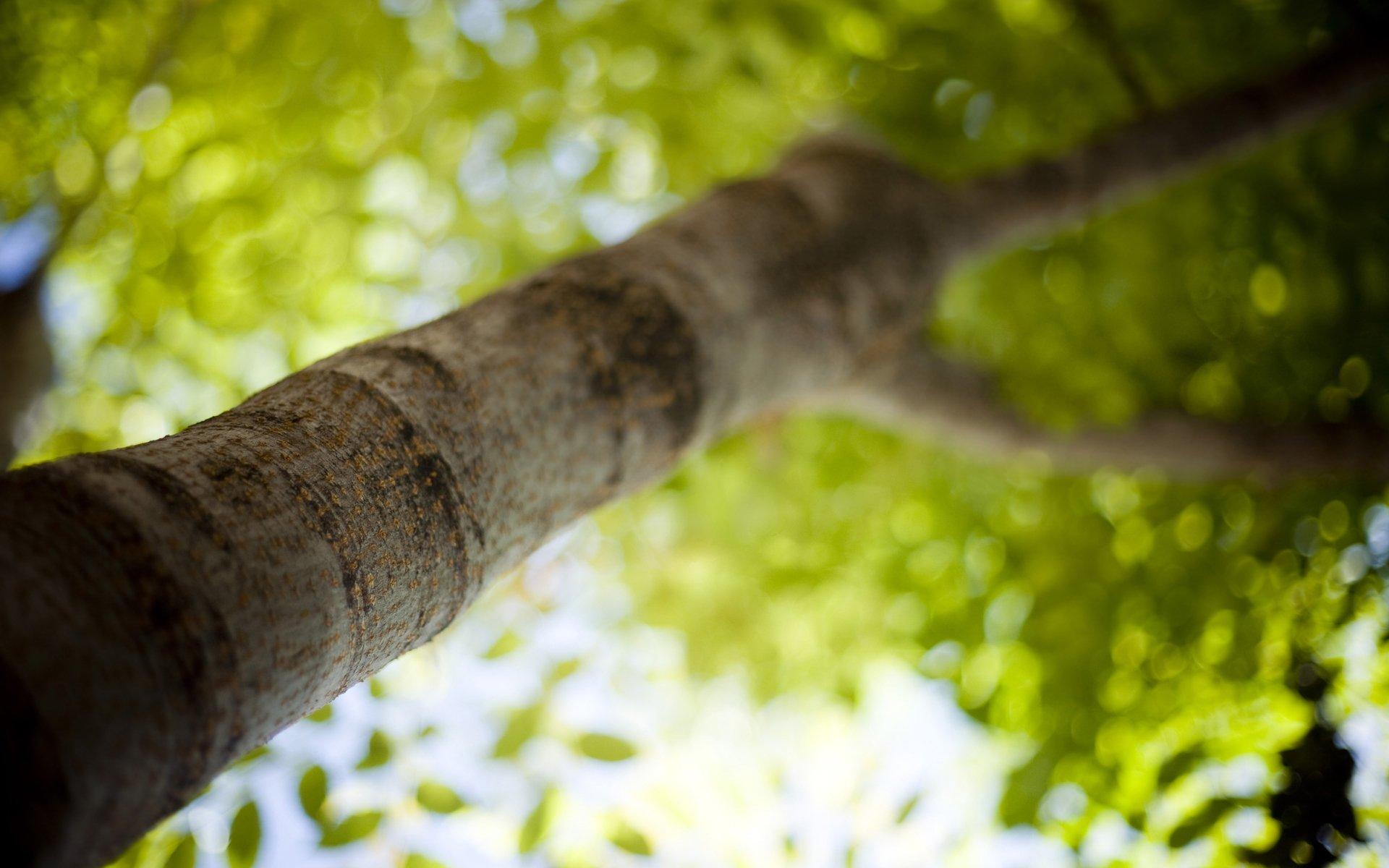 листья дерево фокус загрузить