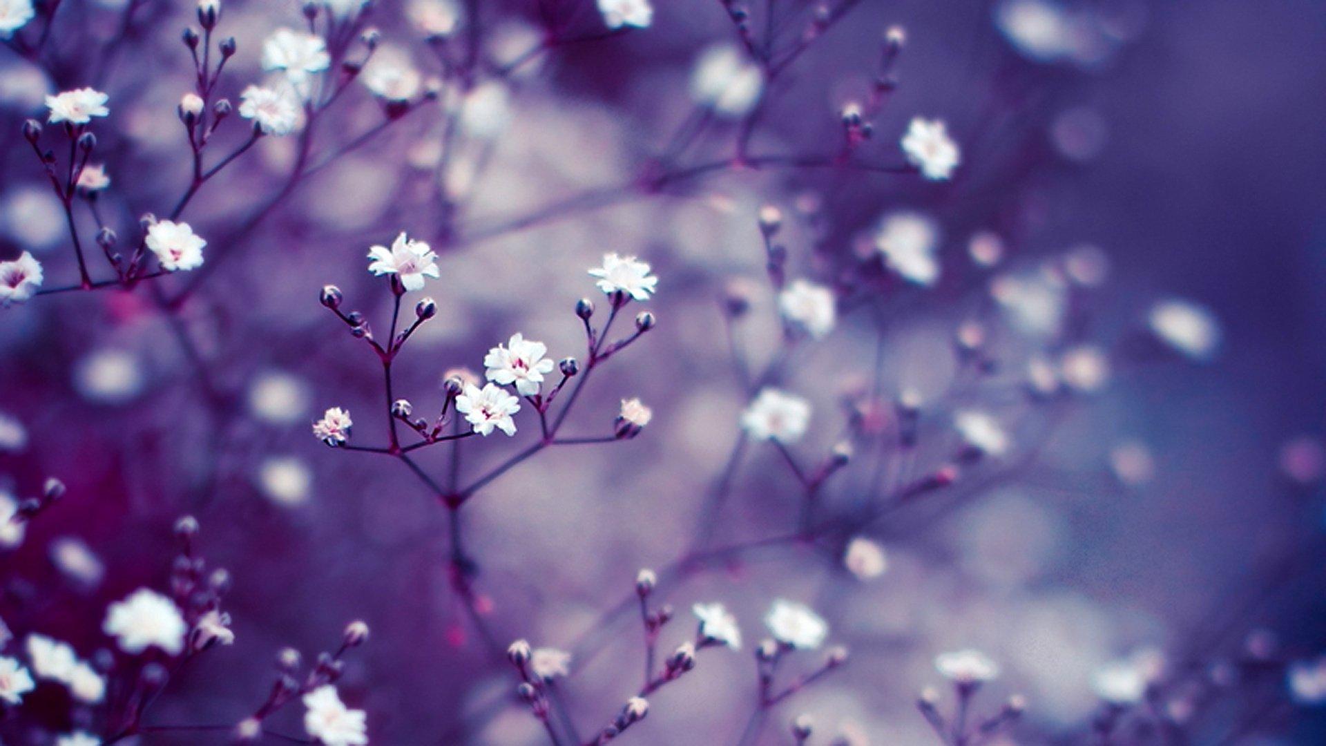 Сиреневый цветок онлайн