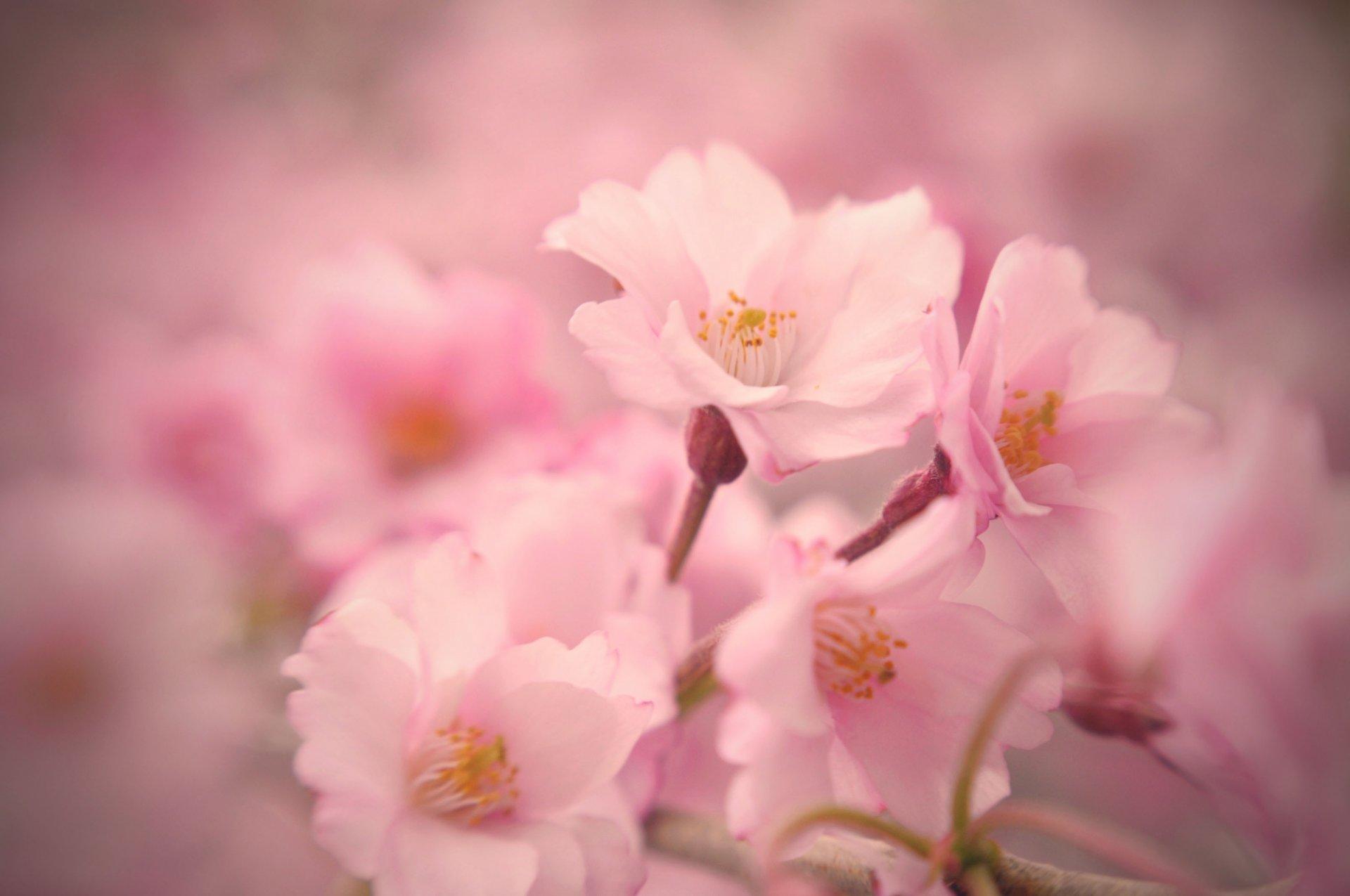 Как, цветы нежные картинки красивые