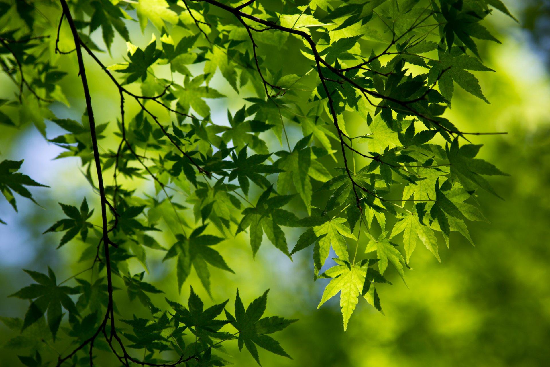 Зелень деревья листва скачать