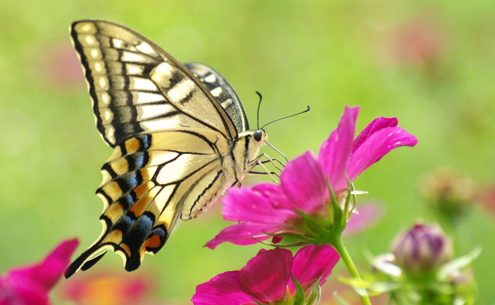 Обои мир бабочек, красота, цветок. Макро foto 9
