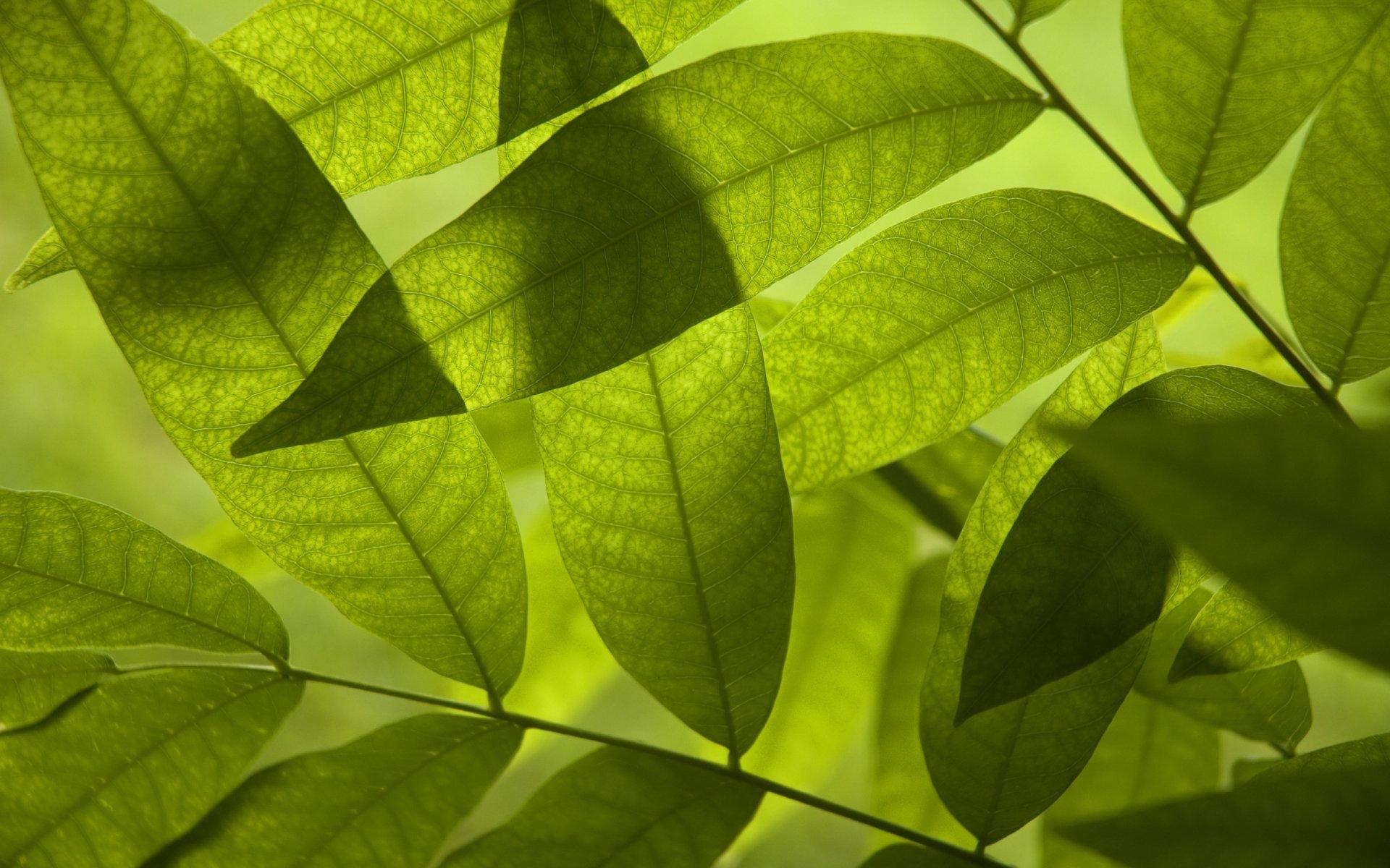 листья блеск leaves Shine загрузить